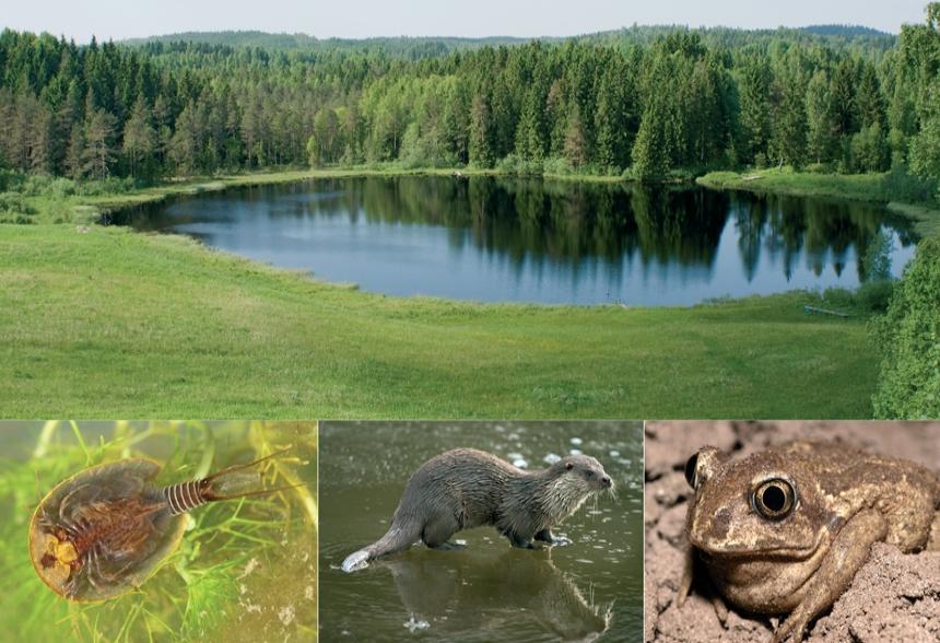 Biodiversity Monitoring Using eDNA
