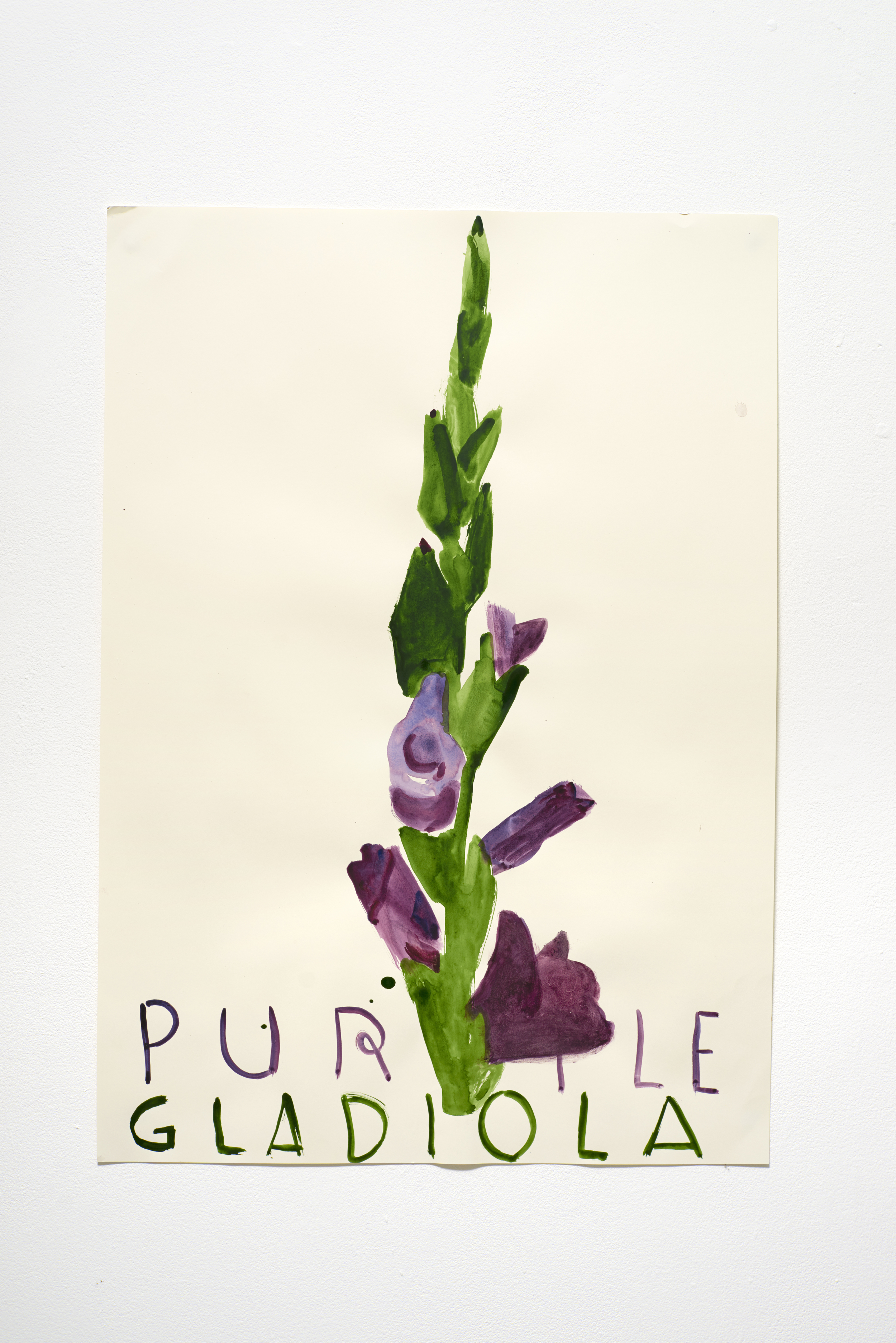 紫色劍蘭 Purple Gladiola (2015)