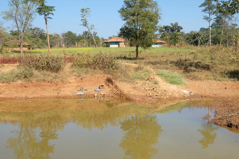 The village pond
