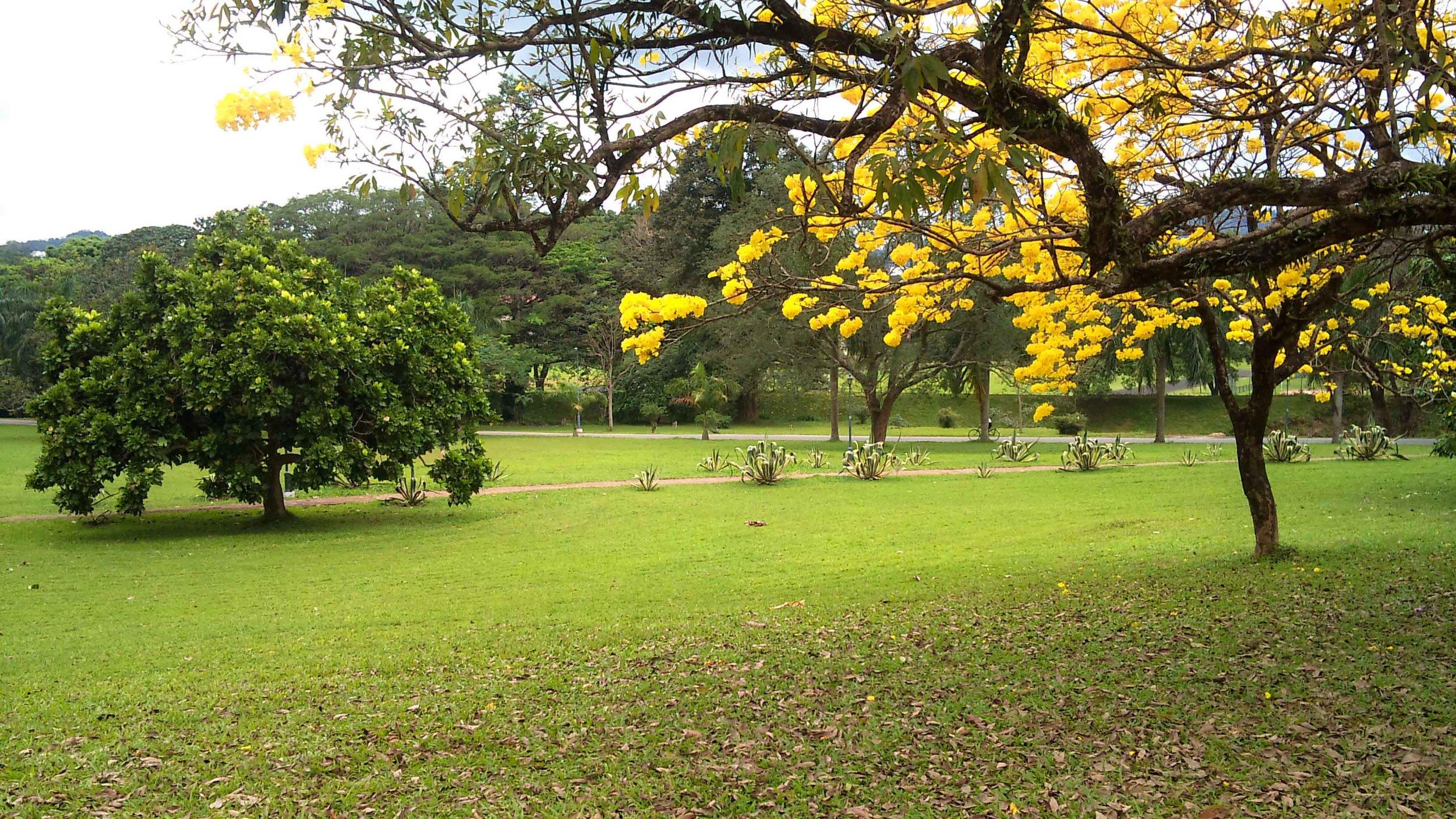 The lovely, verdant campus of the University of Peradeniya.