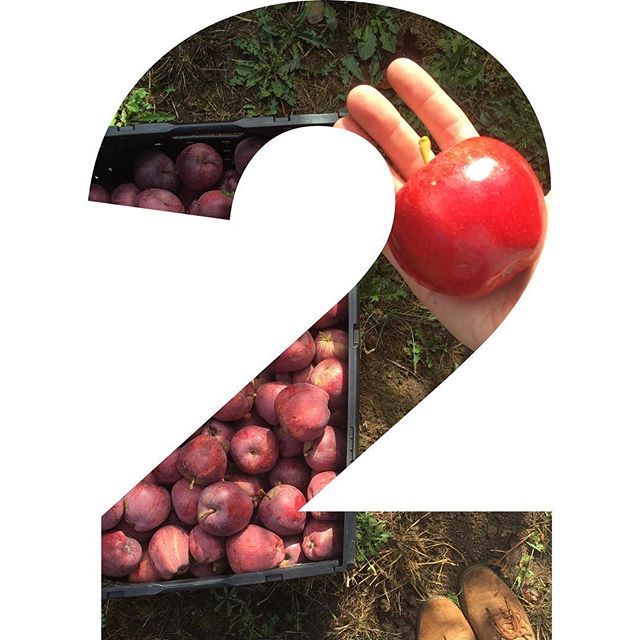 Hello again did you know that you can vote ONCE A DAY!!!!! Just another reminder that there are only 2 more days to vote and we could so use your vote!! PLEASE go to advantiscu.org and vote for us so that we can win a grant to pay for a refrigerated trailer!  ___________________________________________________________#applestoapplesauce #nonprofit #portland #oregon #vote #now #advantiscreditunion #grow #Wednesday #today #two #endfoodwaste #endchildhunger #glean #harvest #preserve #process #can #dehydrate #apple #urbanharvest #donate #f52farmstand #f52life