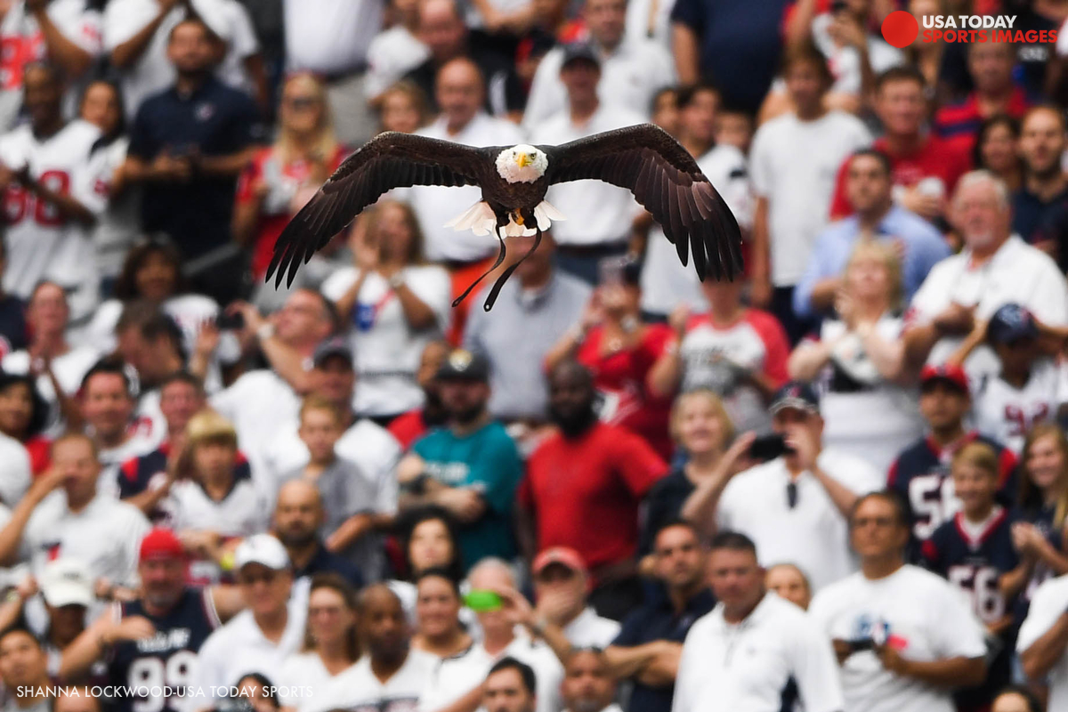 Feels Like Home - Another welcome sight before the game was the flight of a bald eagle named Challenger, who, like my alma mater of Auburn University, flew around the football stadium just before the national anthem.