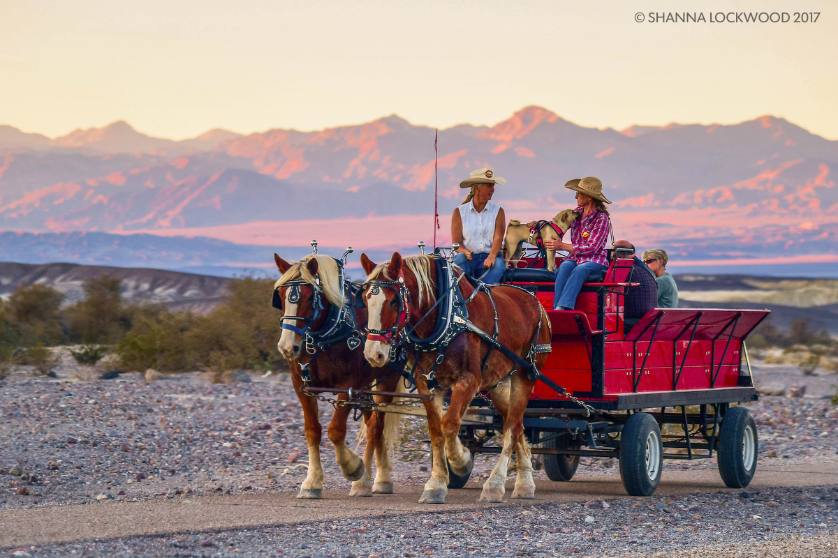 Nov 7, 2017; Death Valley, CA, USA; Horses pull a wagon as the sun sets in Death Valley. Copyright: Shanna Lockwood