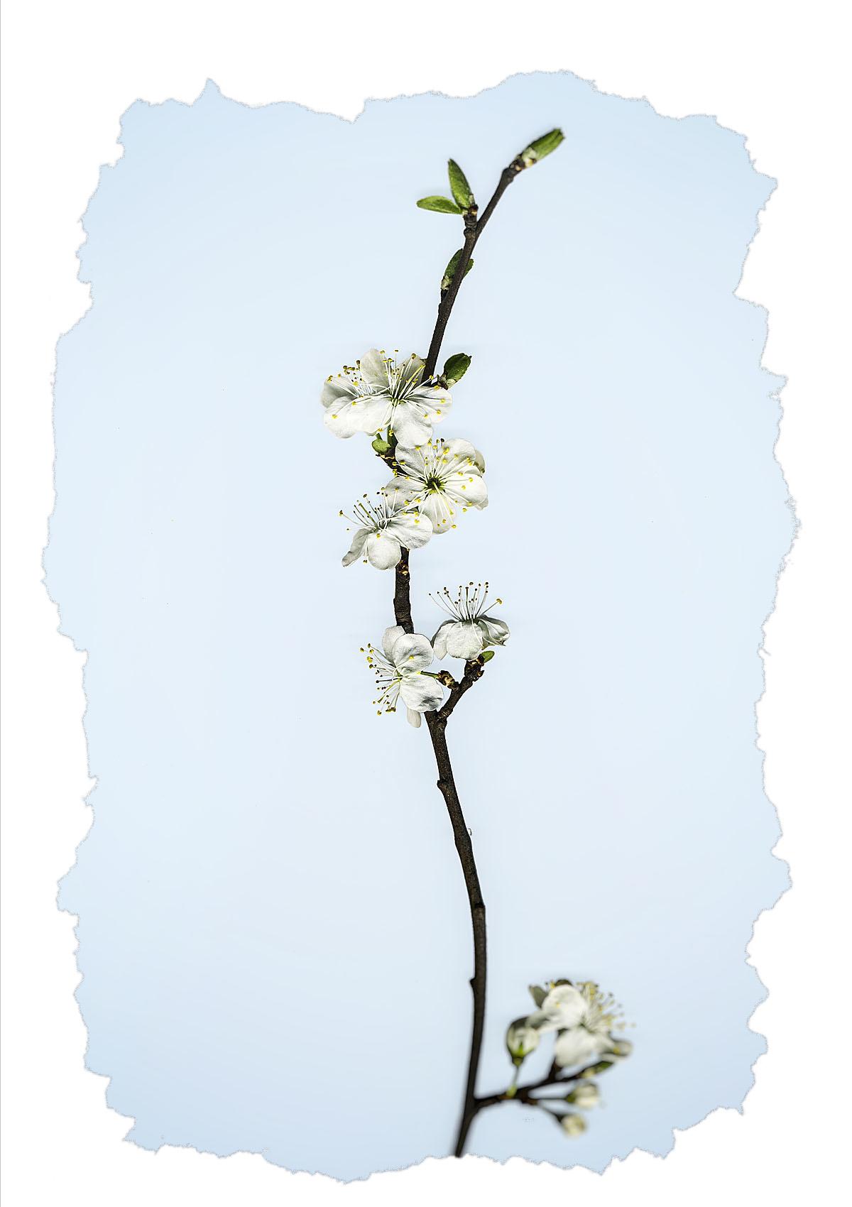 Blossom (1).jpg