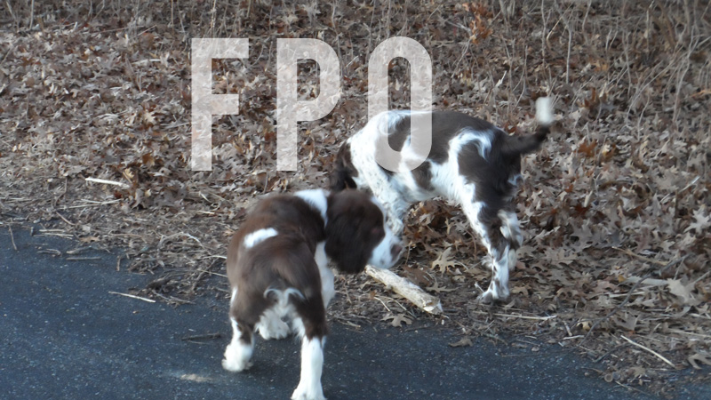 puppies-fpo.jpg