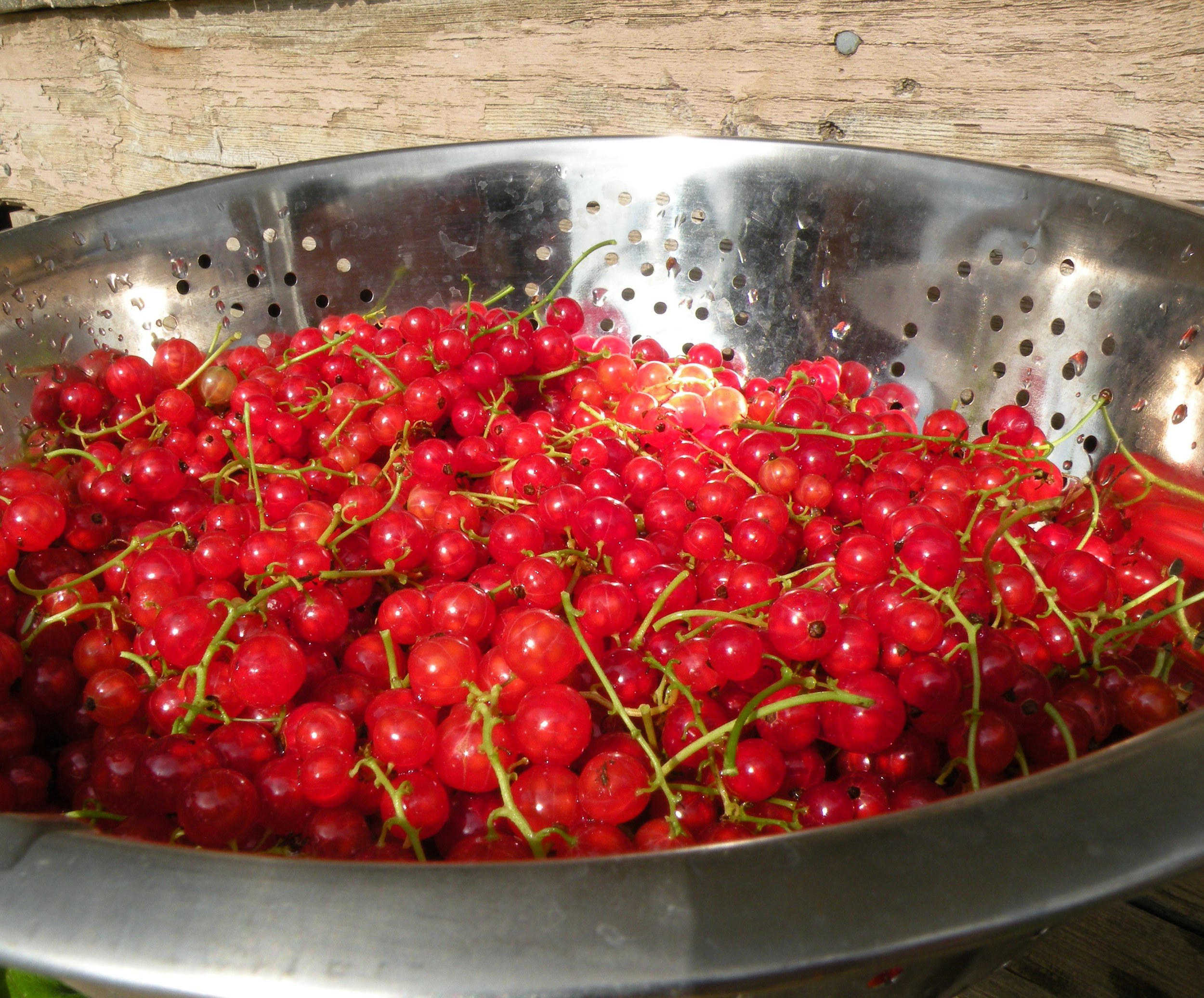 Red Currant Sunsets