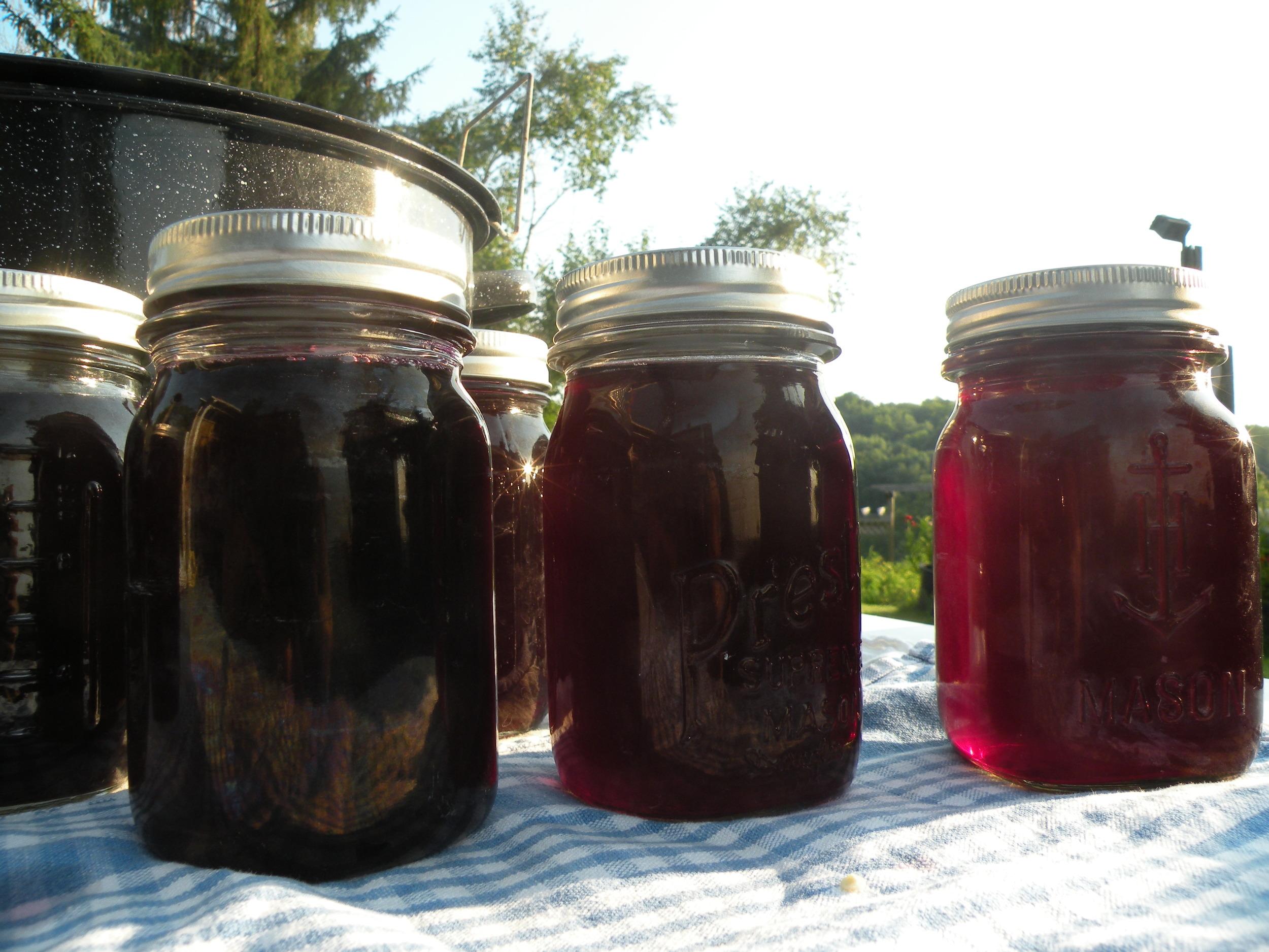 Elderberry juicing 2014