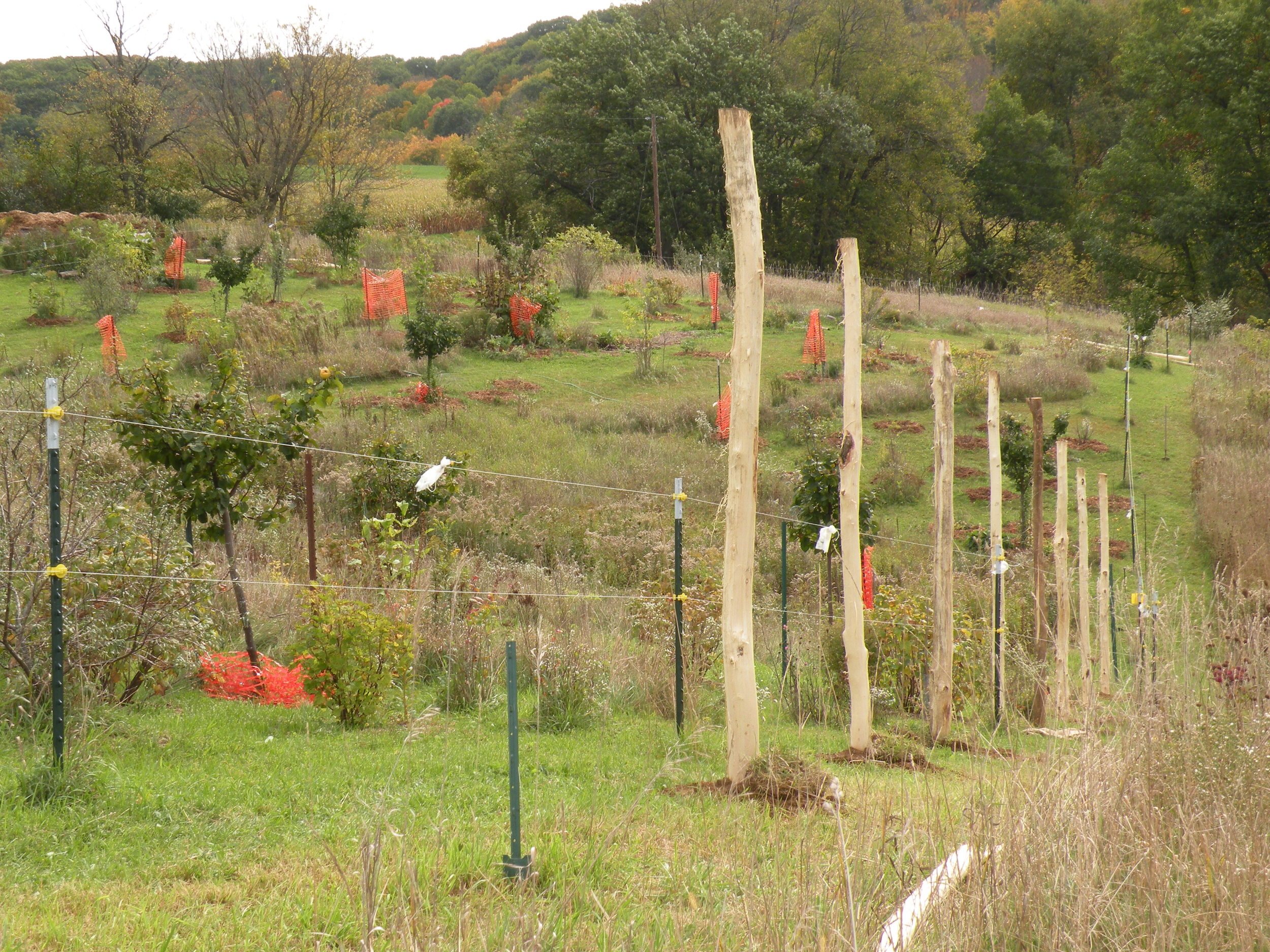 Orchard fence taking shape. We have 24 posts in the ground so far and would so appreciate 24 more funders contributing $24 or more ea in the next 24 hours! Help us nail this one home:-) Go to  indiegogo.com  for details and to donate. Thank you!