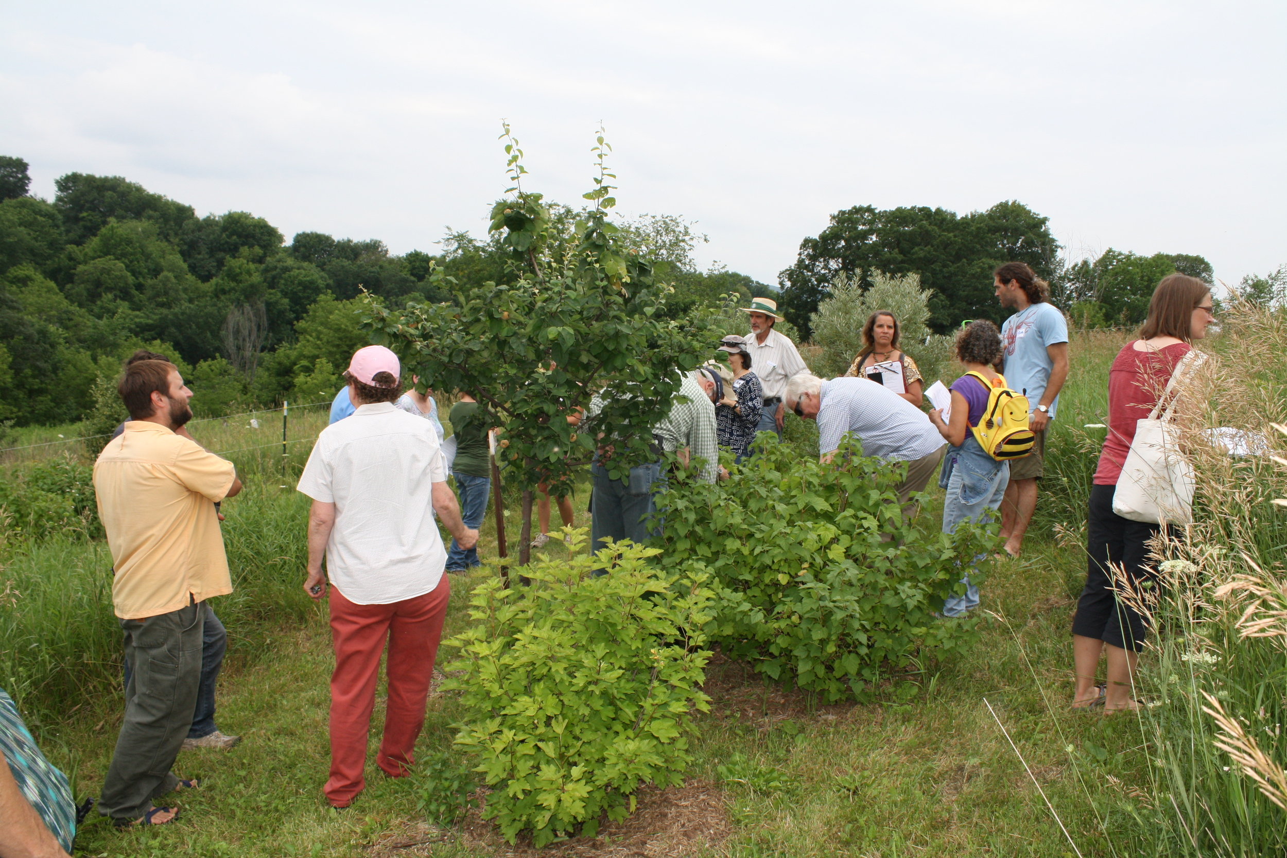touring our young food forests during currant events