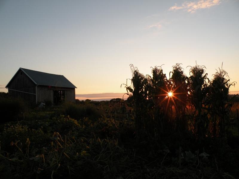 sunset over csa gardens