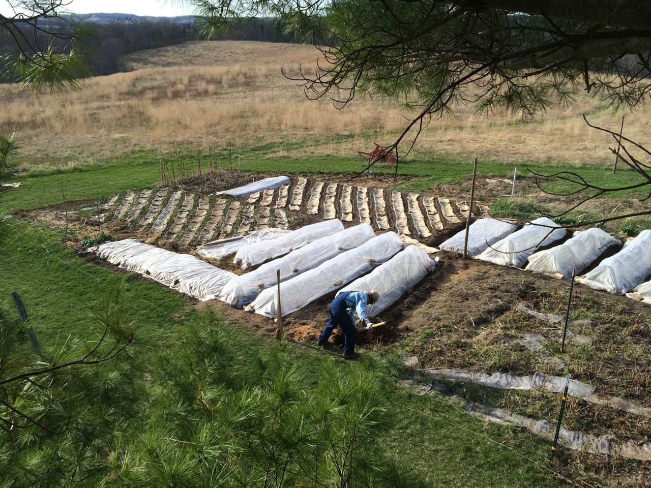 Rob tending the soil and the CSA beds. Photo by Ian Aley, 4 - 25 - 15