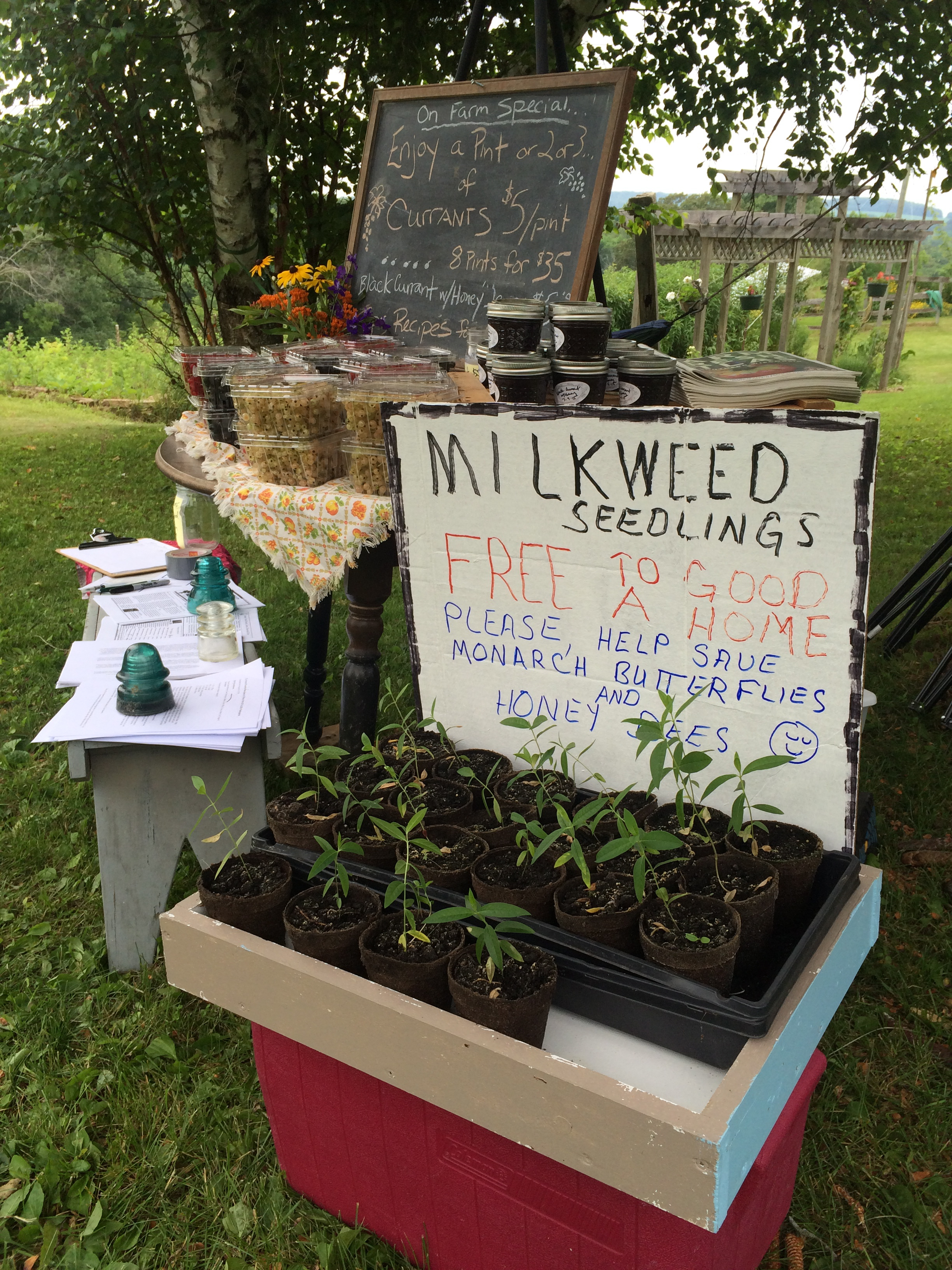 Milkweed seedlings grown and shared by farm neighbor and fellow beekeeper Dennis Hanger, during this summer's Picnic in the Orchard. Photo by Ian Aley