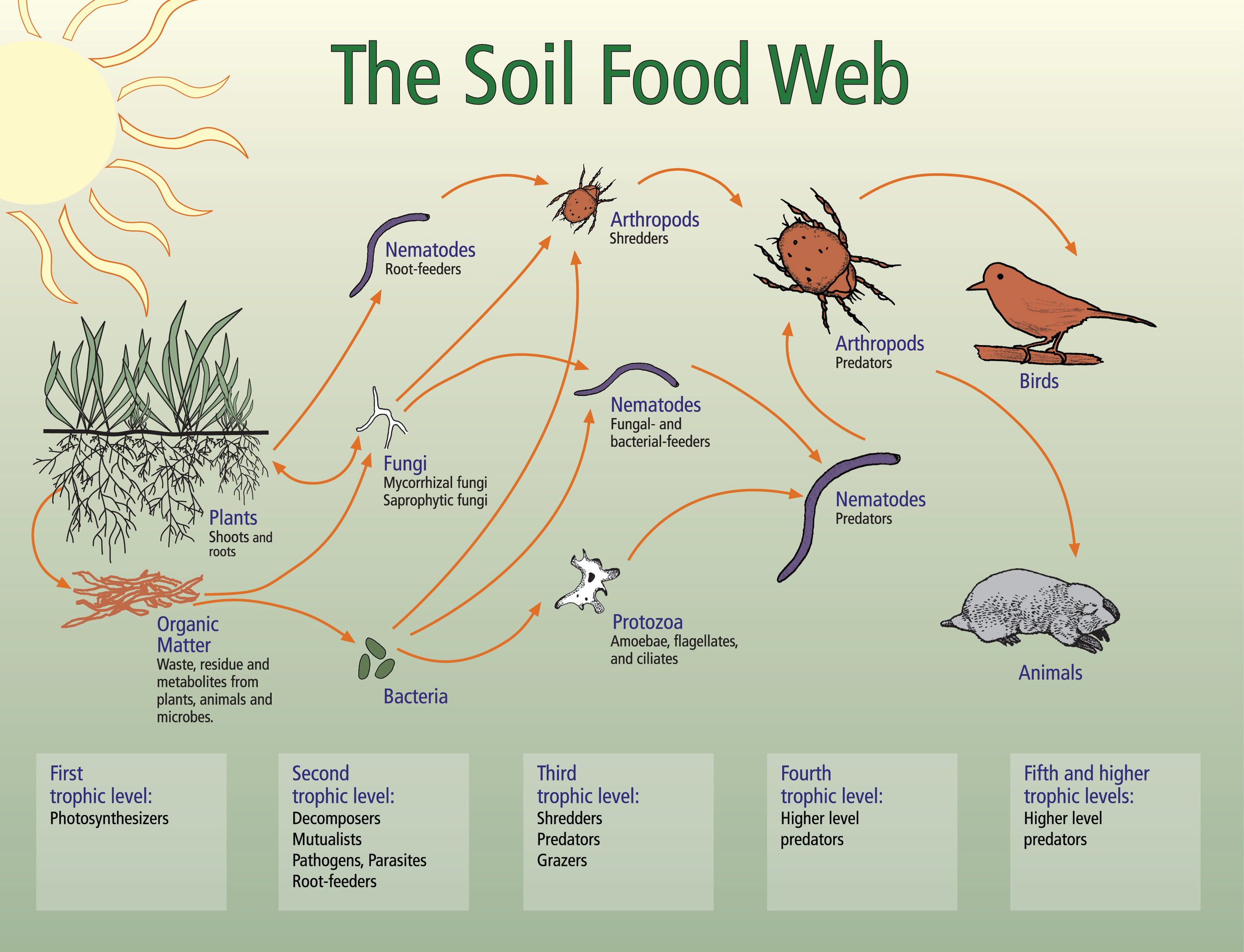 Soil Food Web.  Source Natural Resources Conservation Service