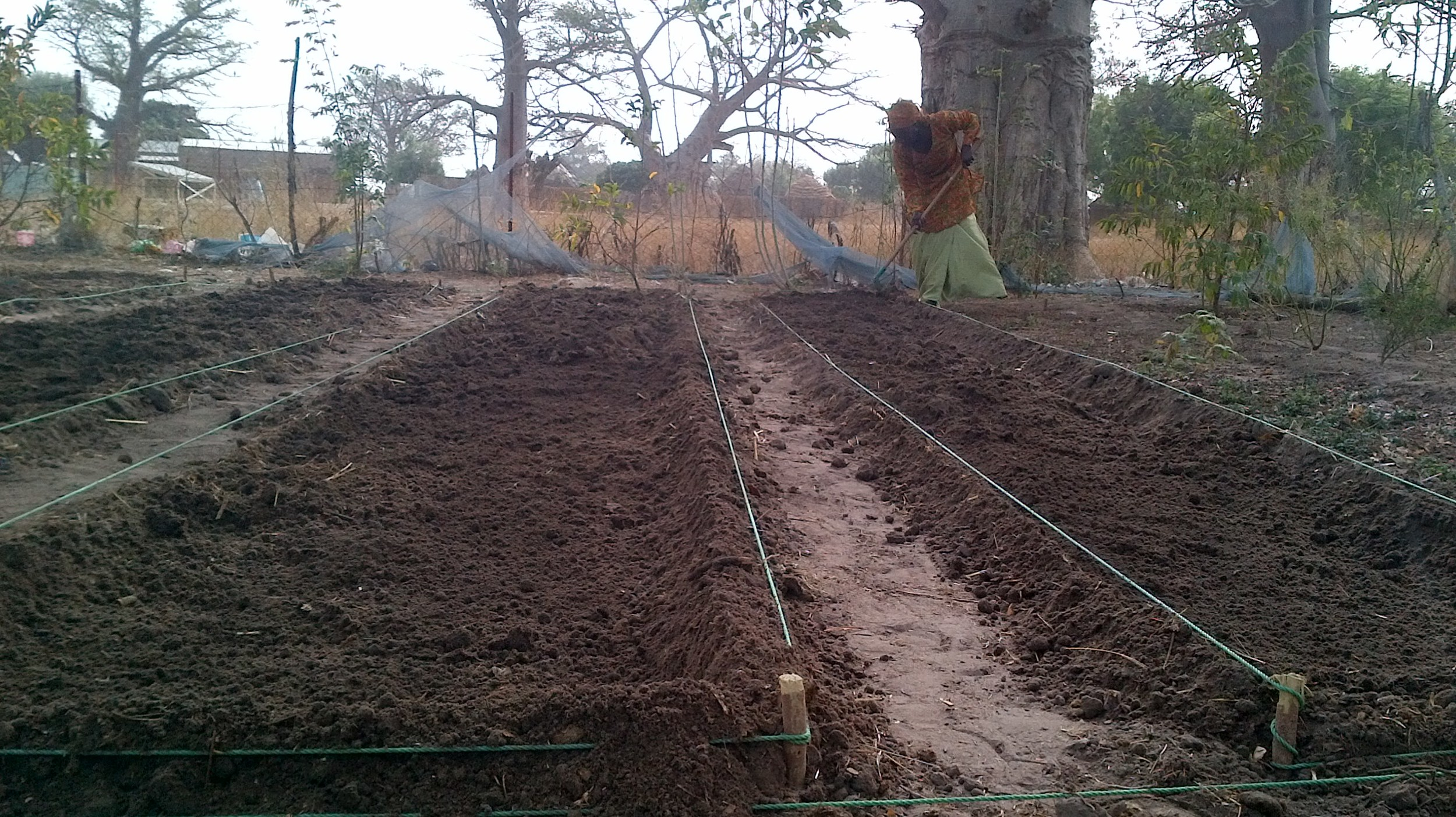 Alimatou preparing the soil at Kembu in preparation for  seeding vegetable variety trials in Senegal