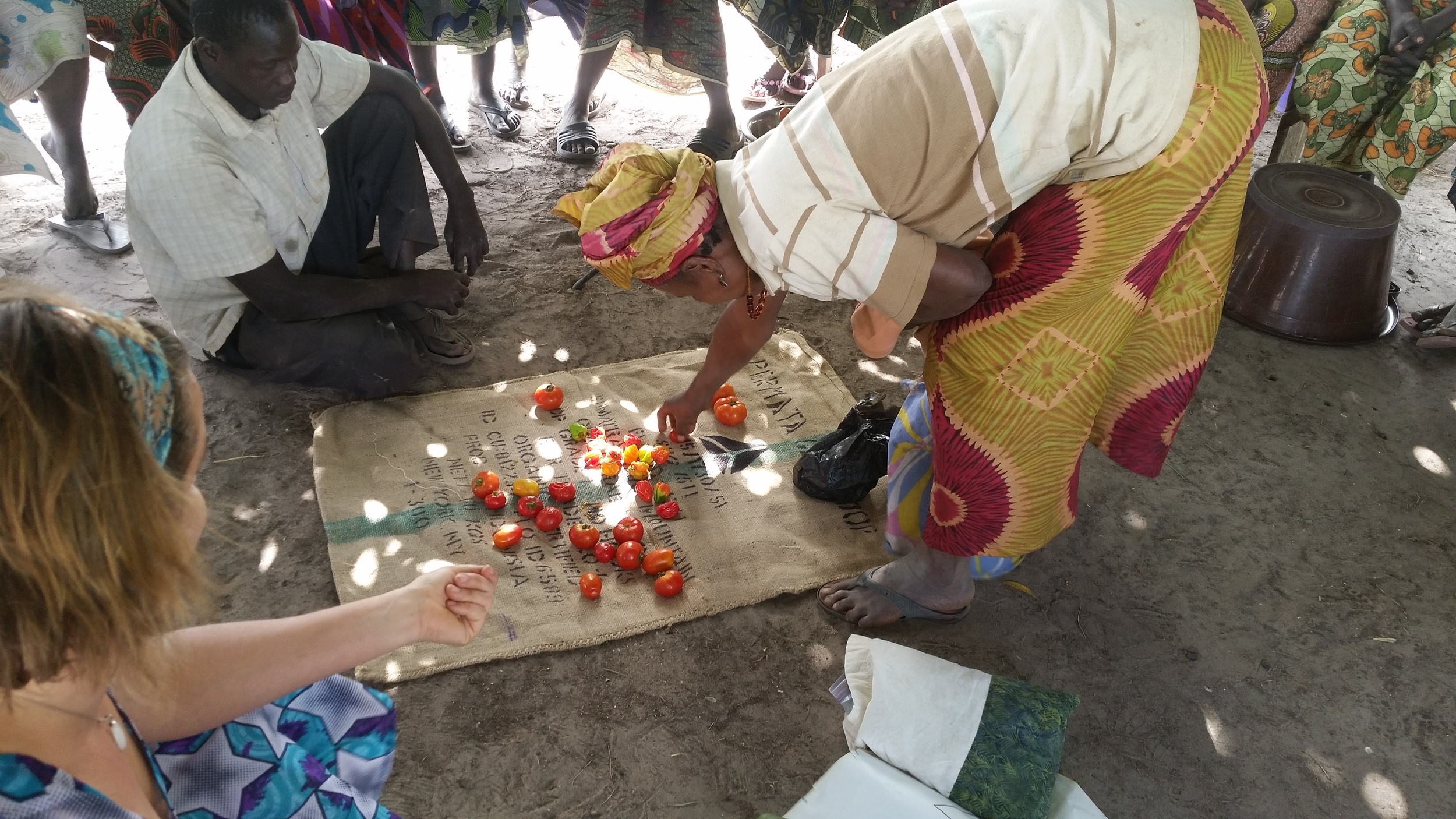 Selecting Tomato and Hot peppers for processing seeds with  the Owayel farm Women in Senegal