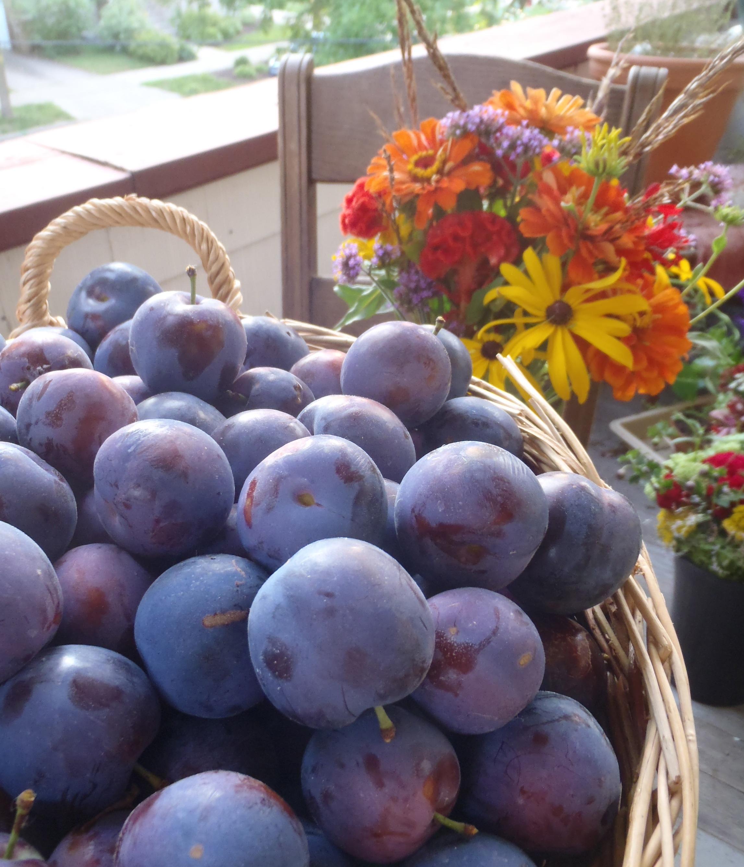 plums 8 - 14 - 15.jpg