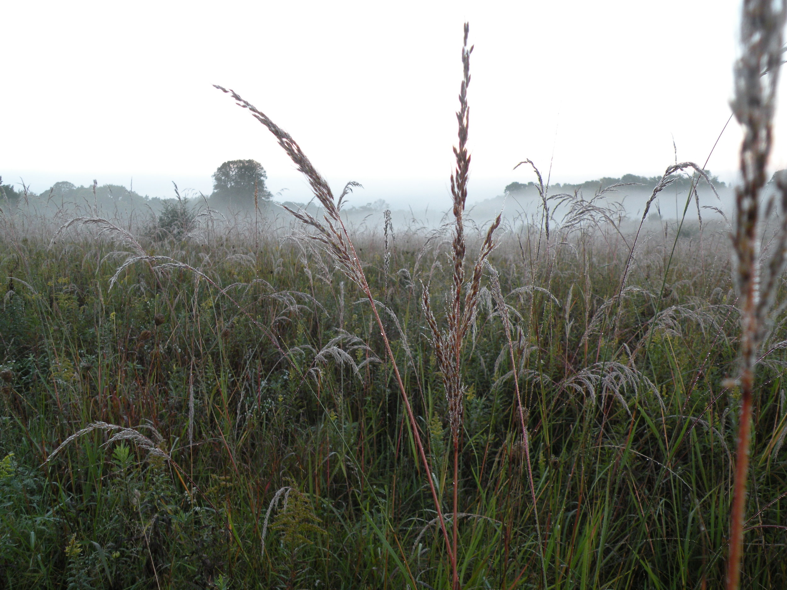 Morning fog over our prairie. Photo by Erin Schneider