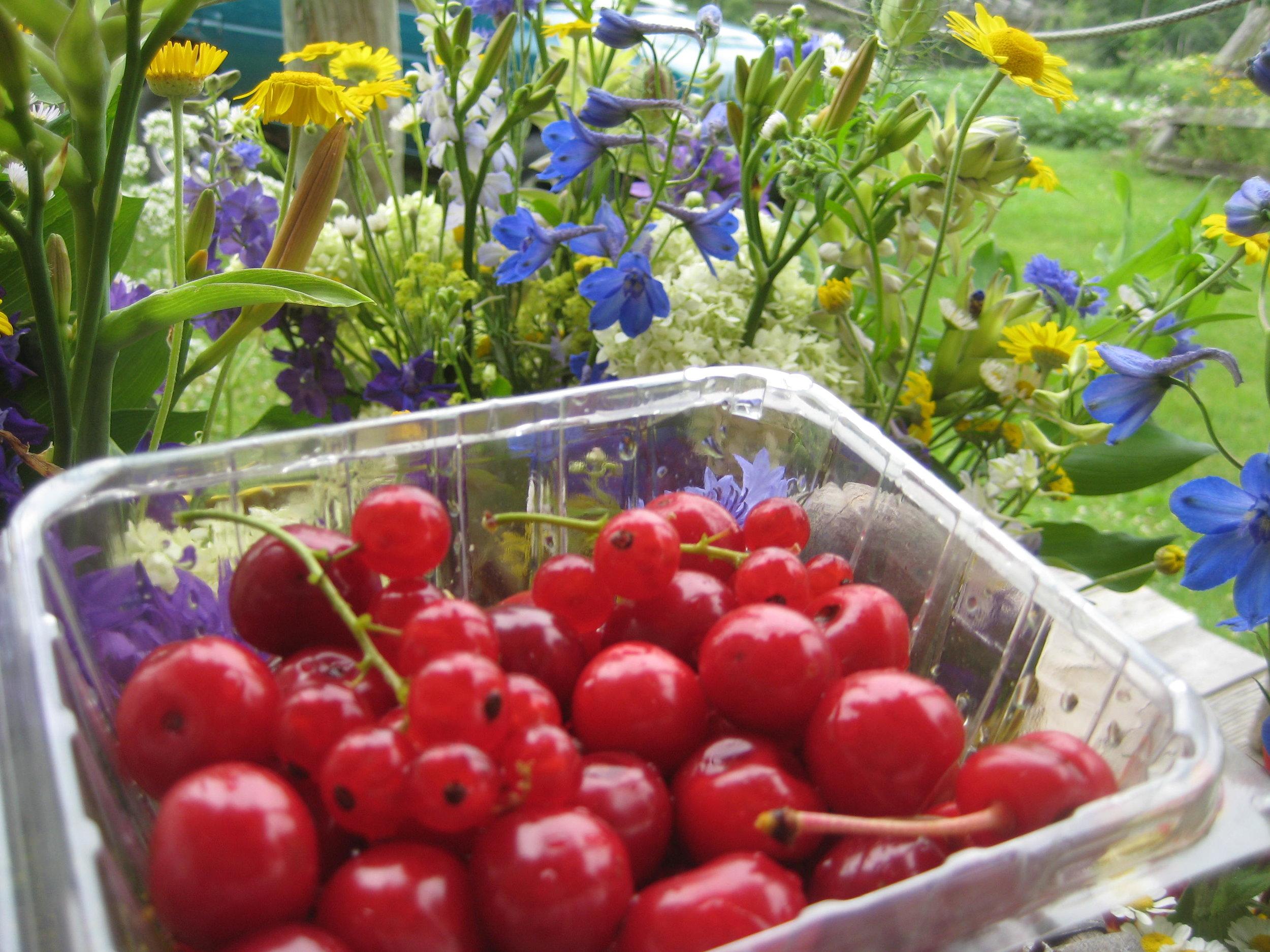 Currants, cherries, delphinium bliss