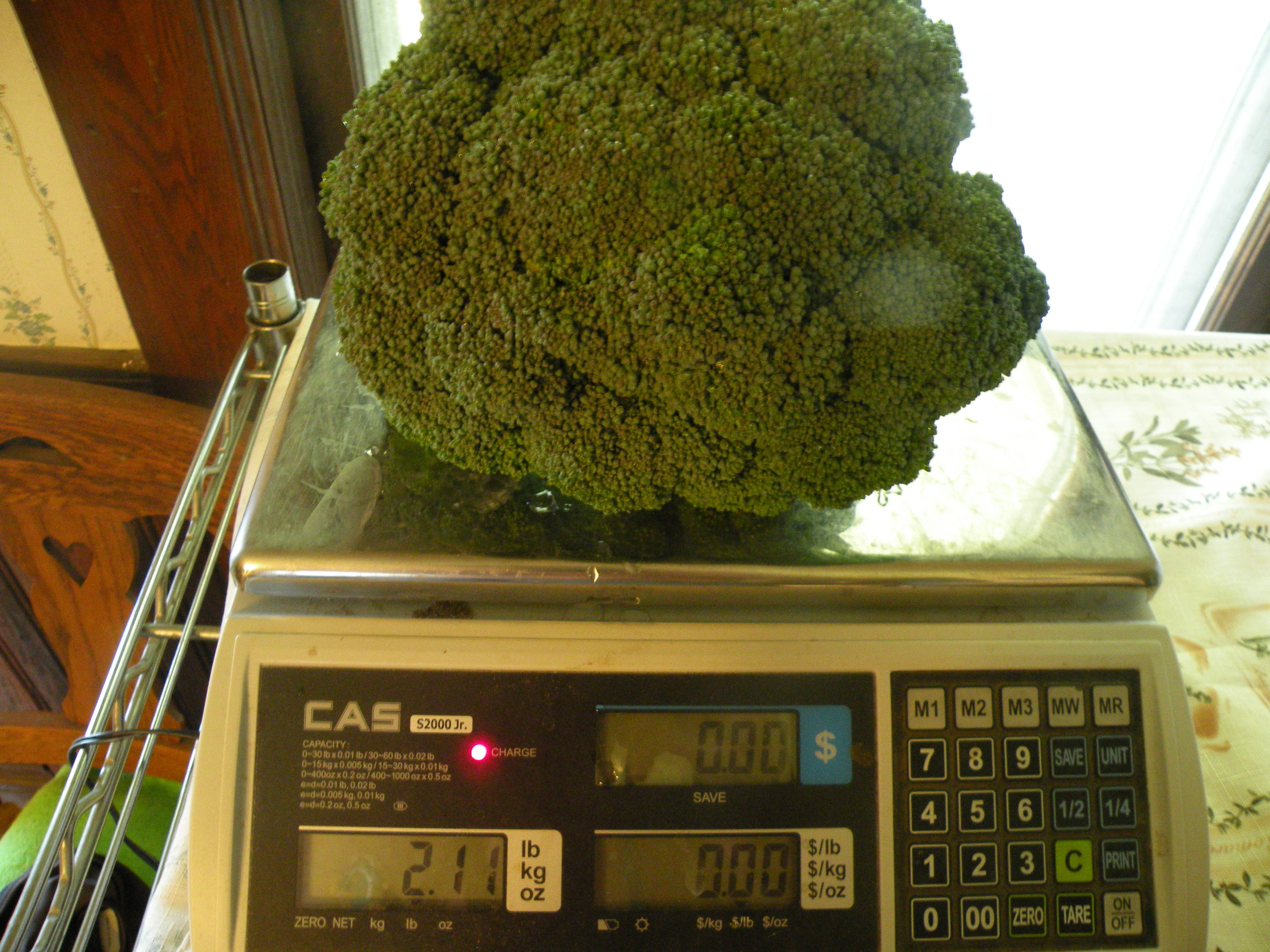 Broccoli made a comeback late in the season, though overall pounds were down from previous years. Photo by Rob McClure