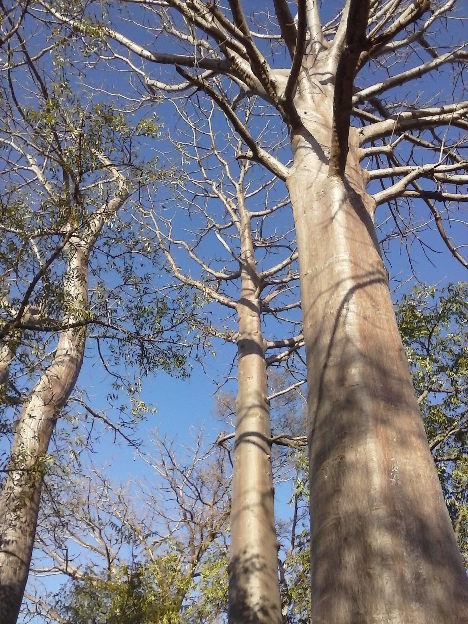 baobab greetings.jpg