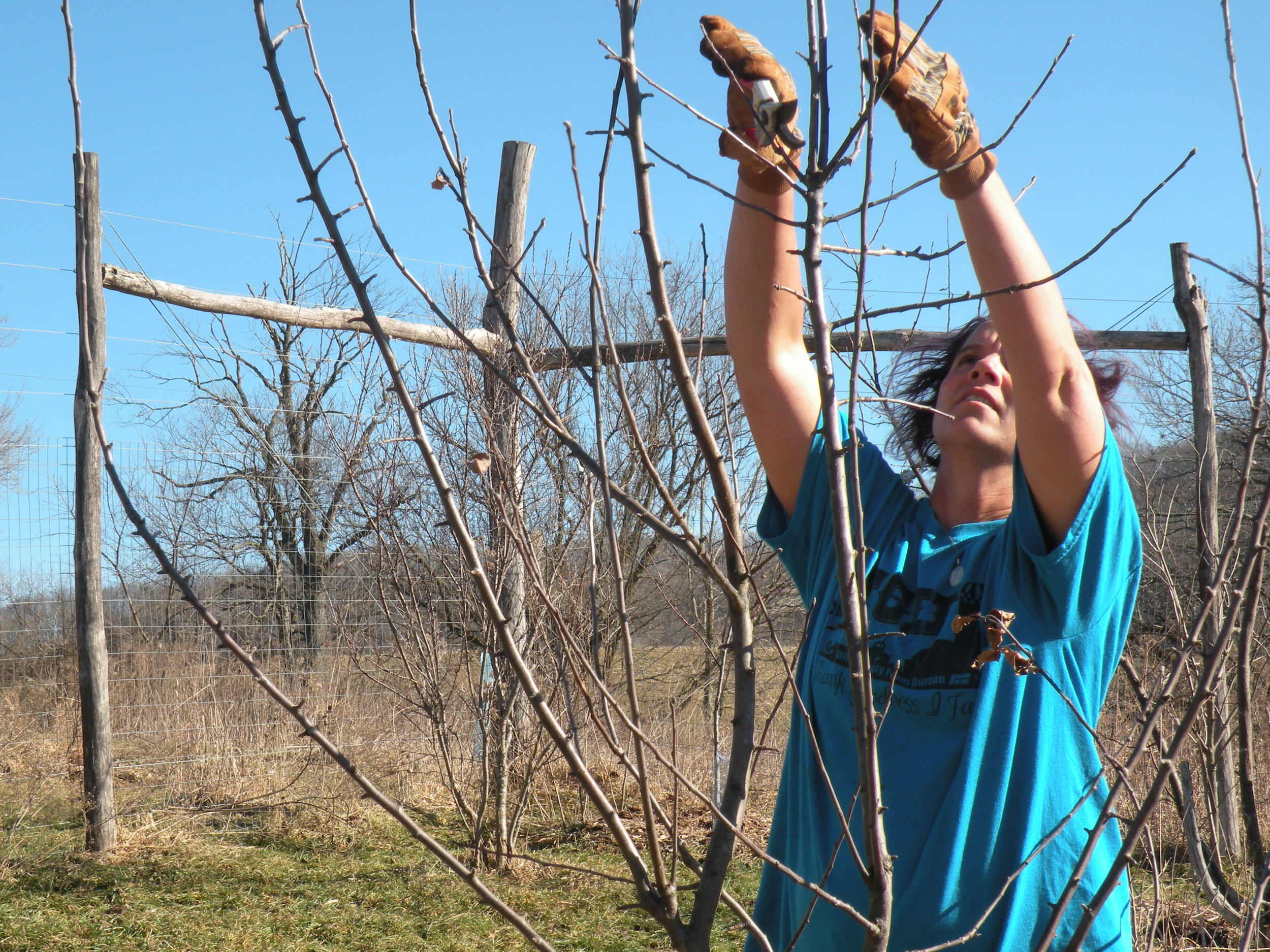 Pruning apple trees in our orchard. Photo by Rob McClure