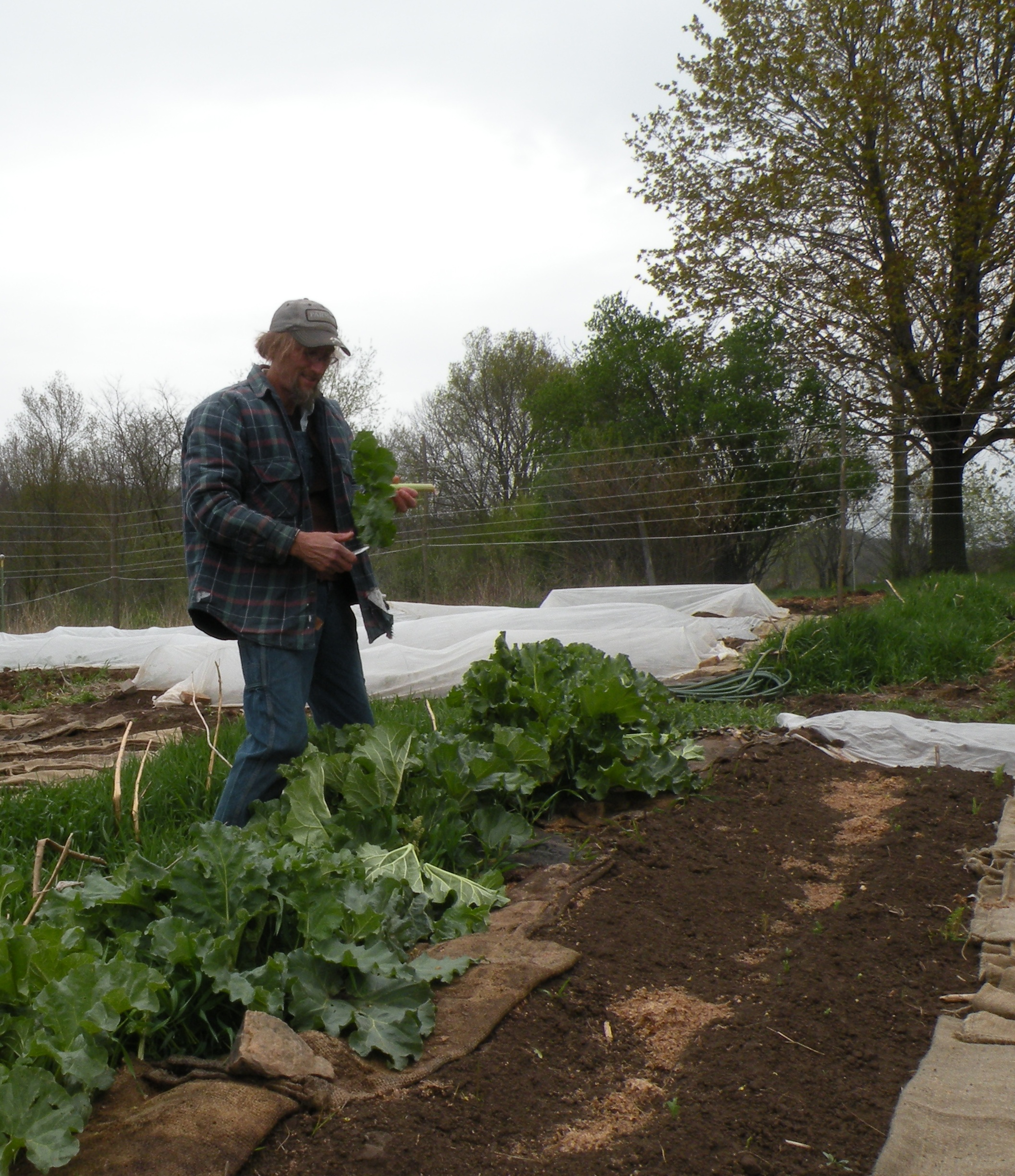 Rob, upright, and pausing from the rhubarb harvest.  Photo by Erin Schneider