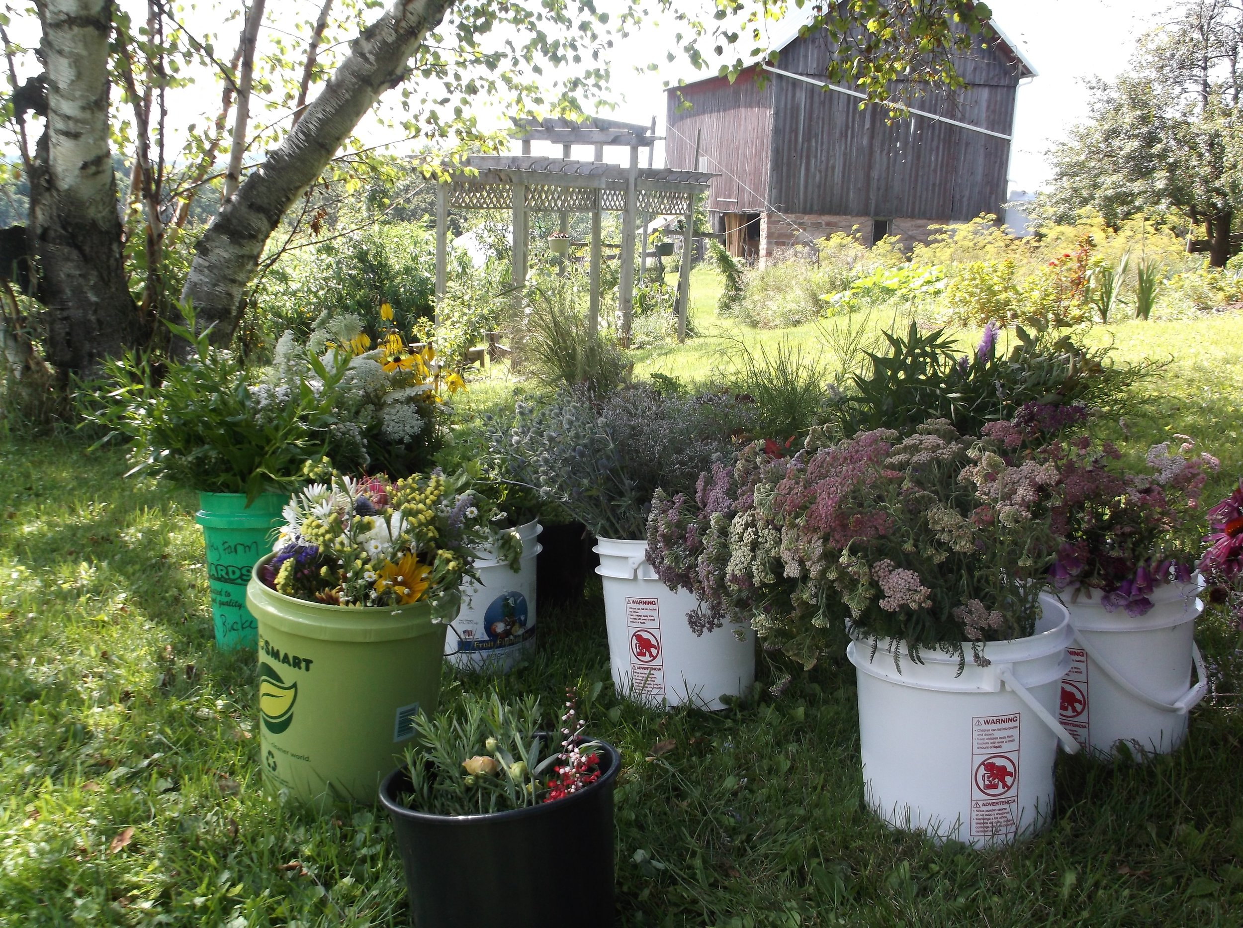 buckets of flowers overflowing and poised for bouquet making. Photo by John Peck