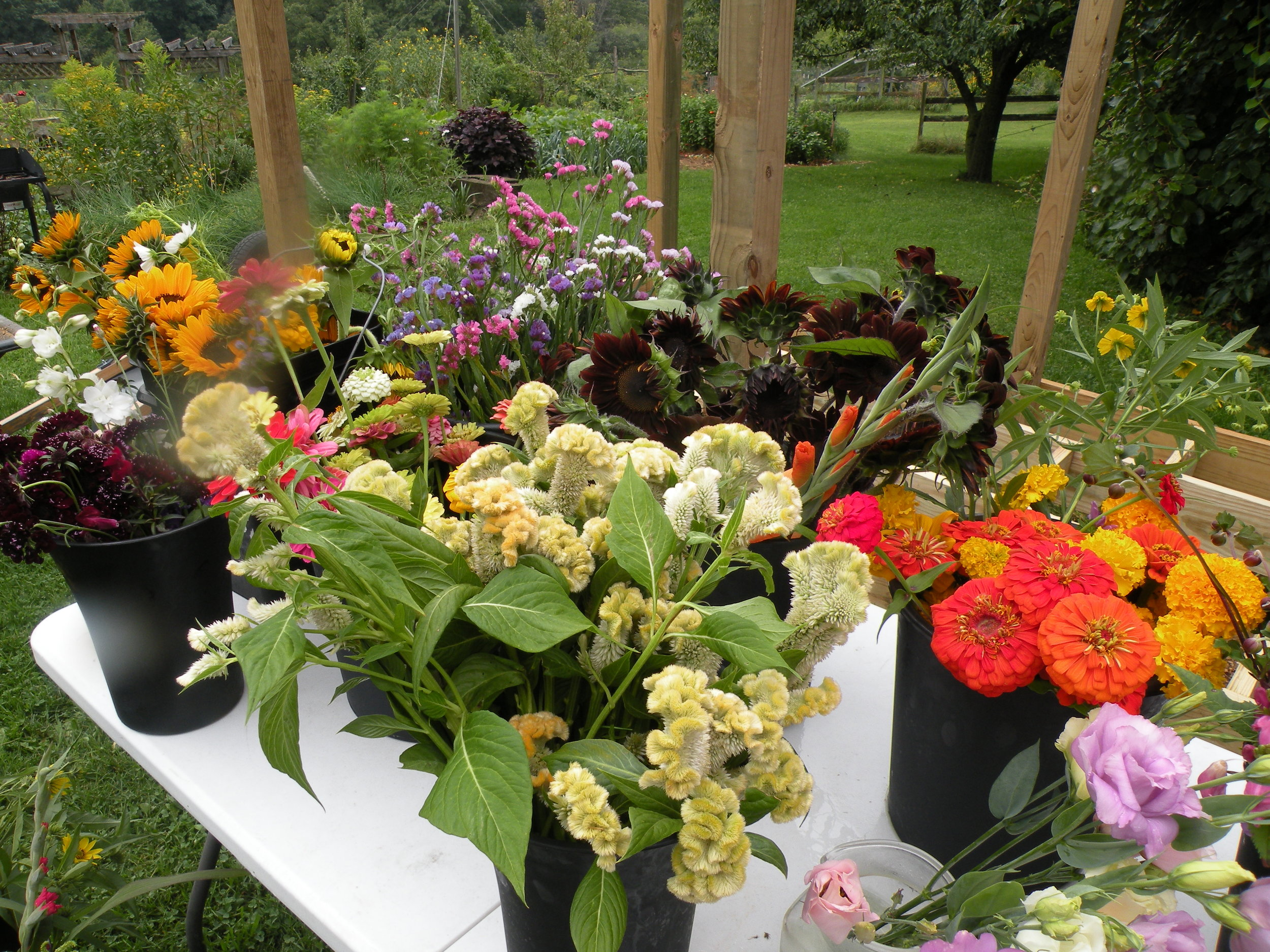 Flowers have been making up for the lack of sunshine this season. Photo by Erin Schneider