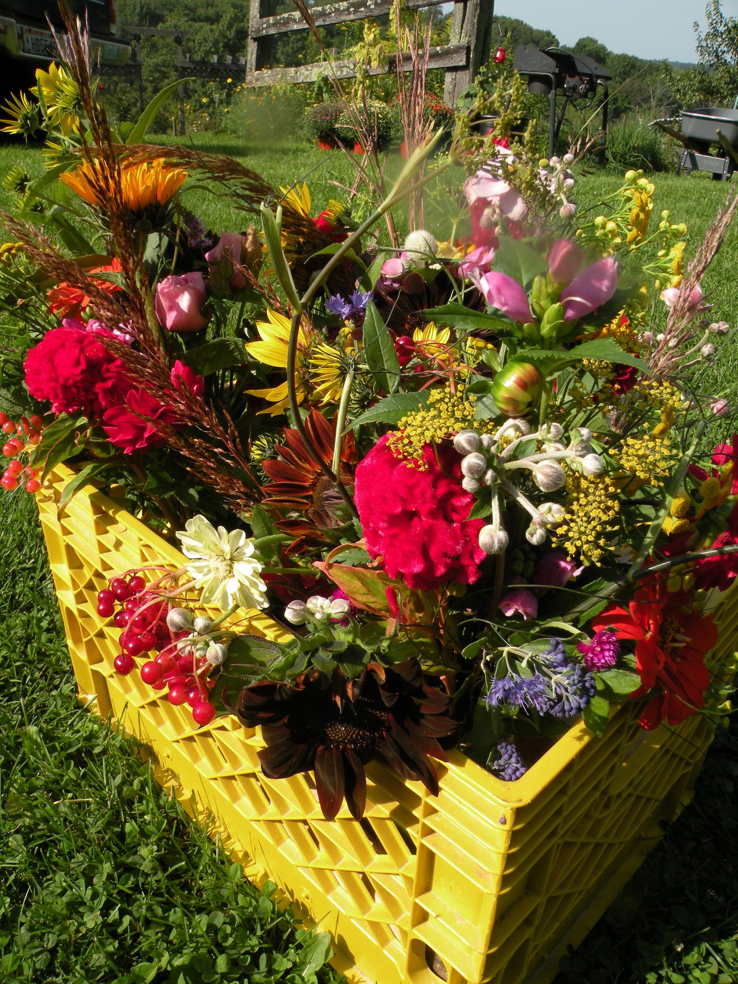 A September Flower CSA Banquet. Photo by Erin Schneider