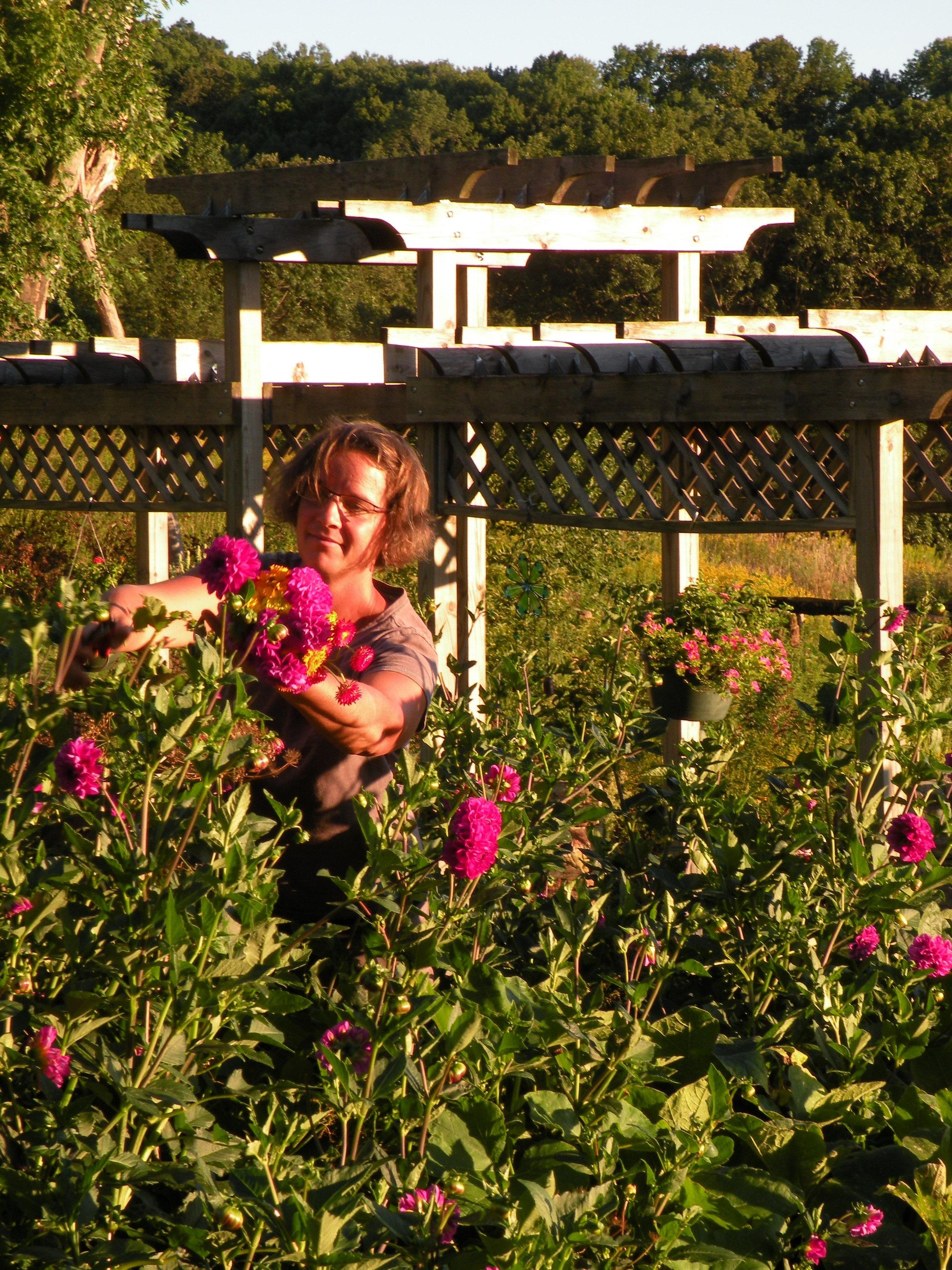 happinenss in a field of dahlias.jpg