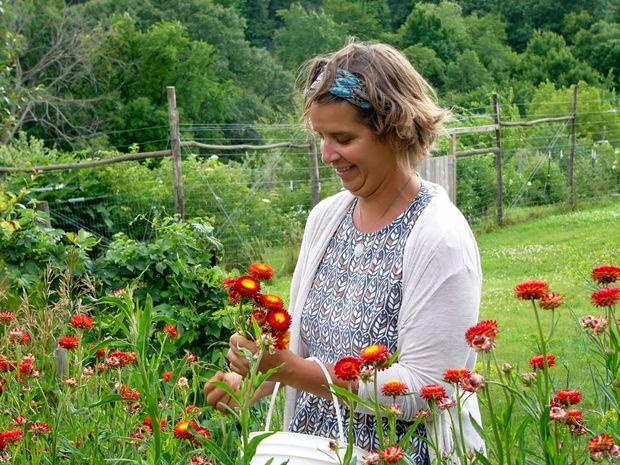 Harvesting Strawflowers.jpg