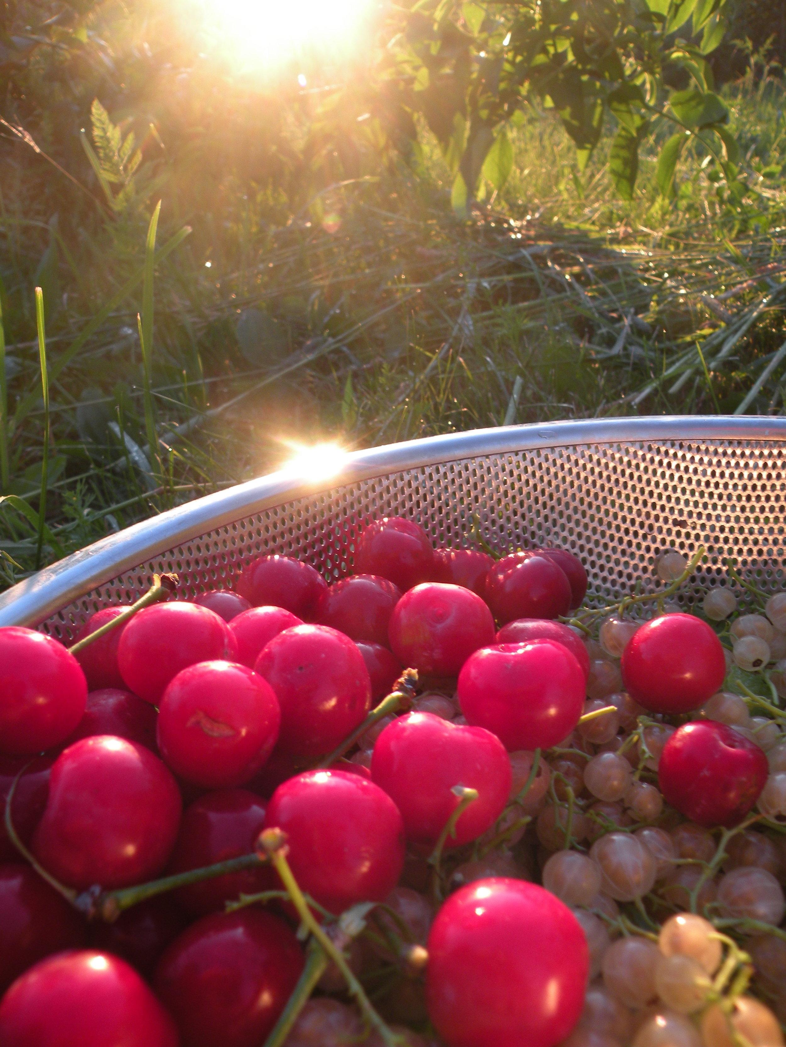 cherry sunsets 6 - 24 - 17.jpg