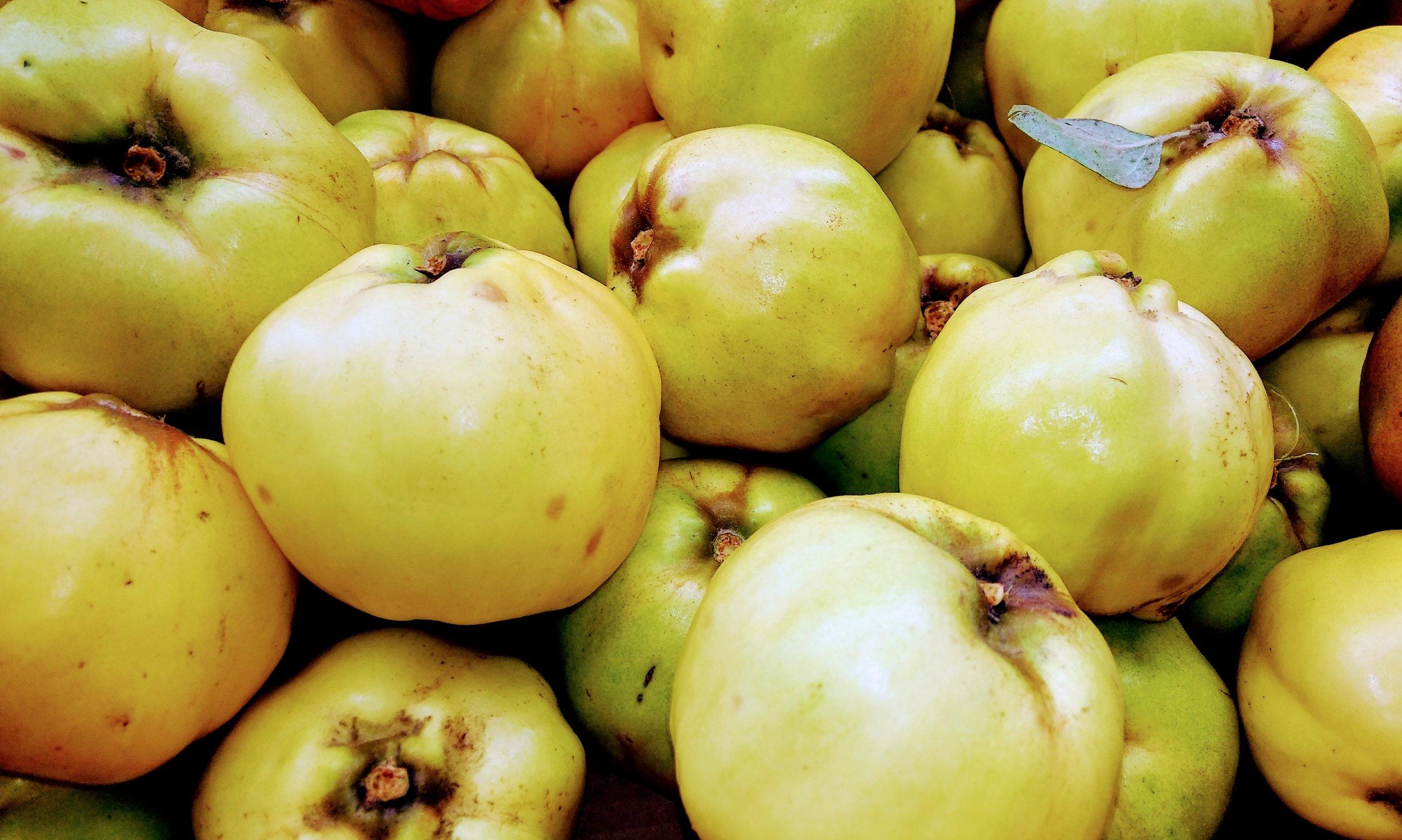 Modest crop of quince fruit 2018