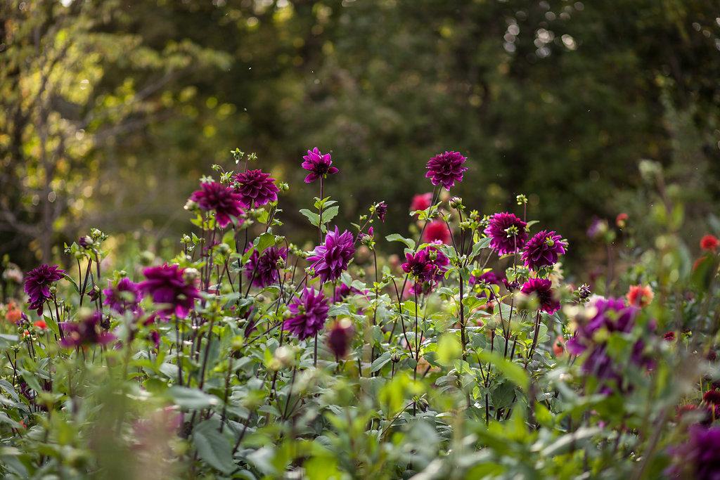 FloralWorkshop-059.jpg