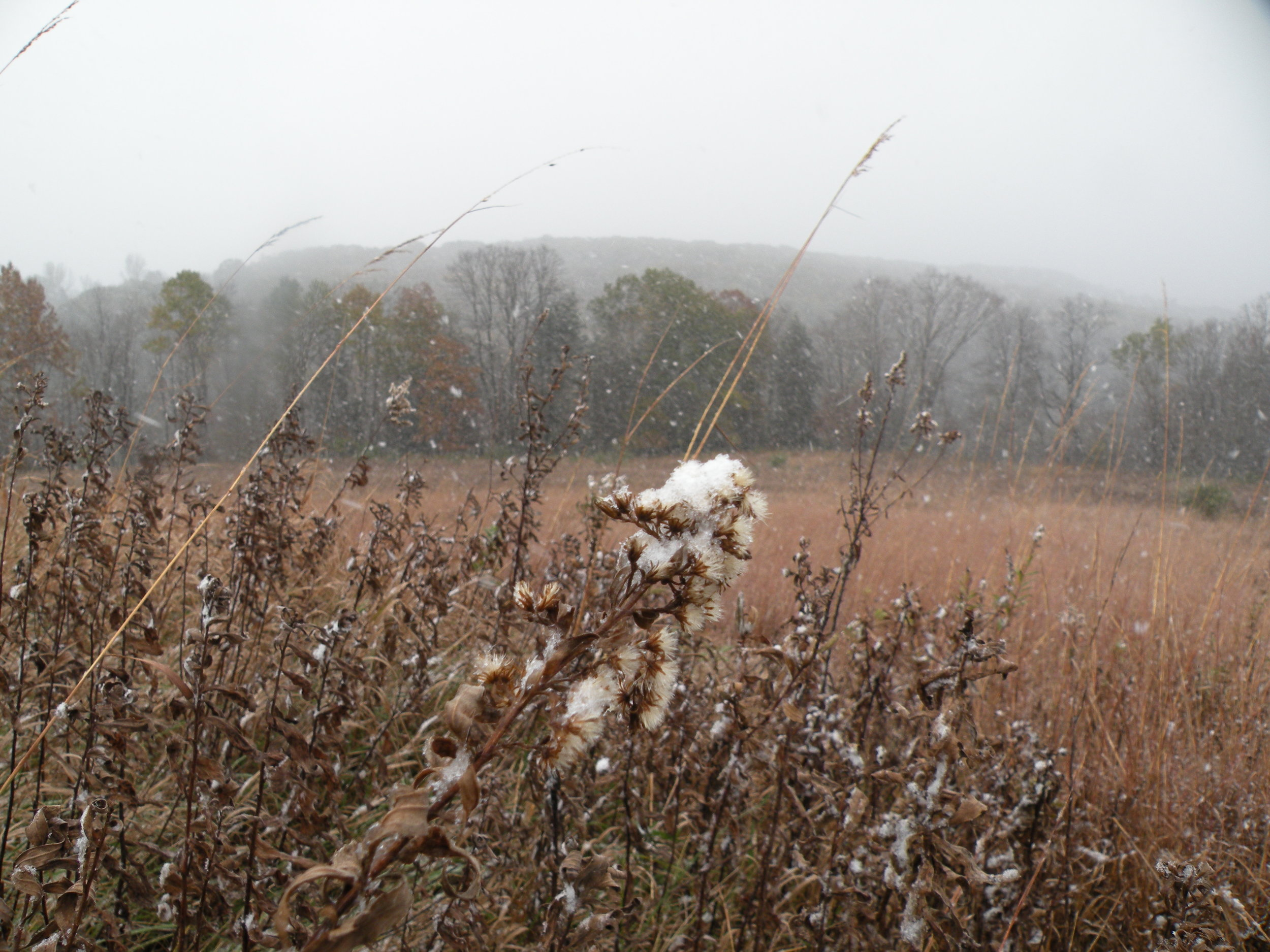 'Lizard Grey' soapstone skies of November bring snow to the prairie, Photo by Rob McClure