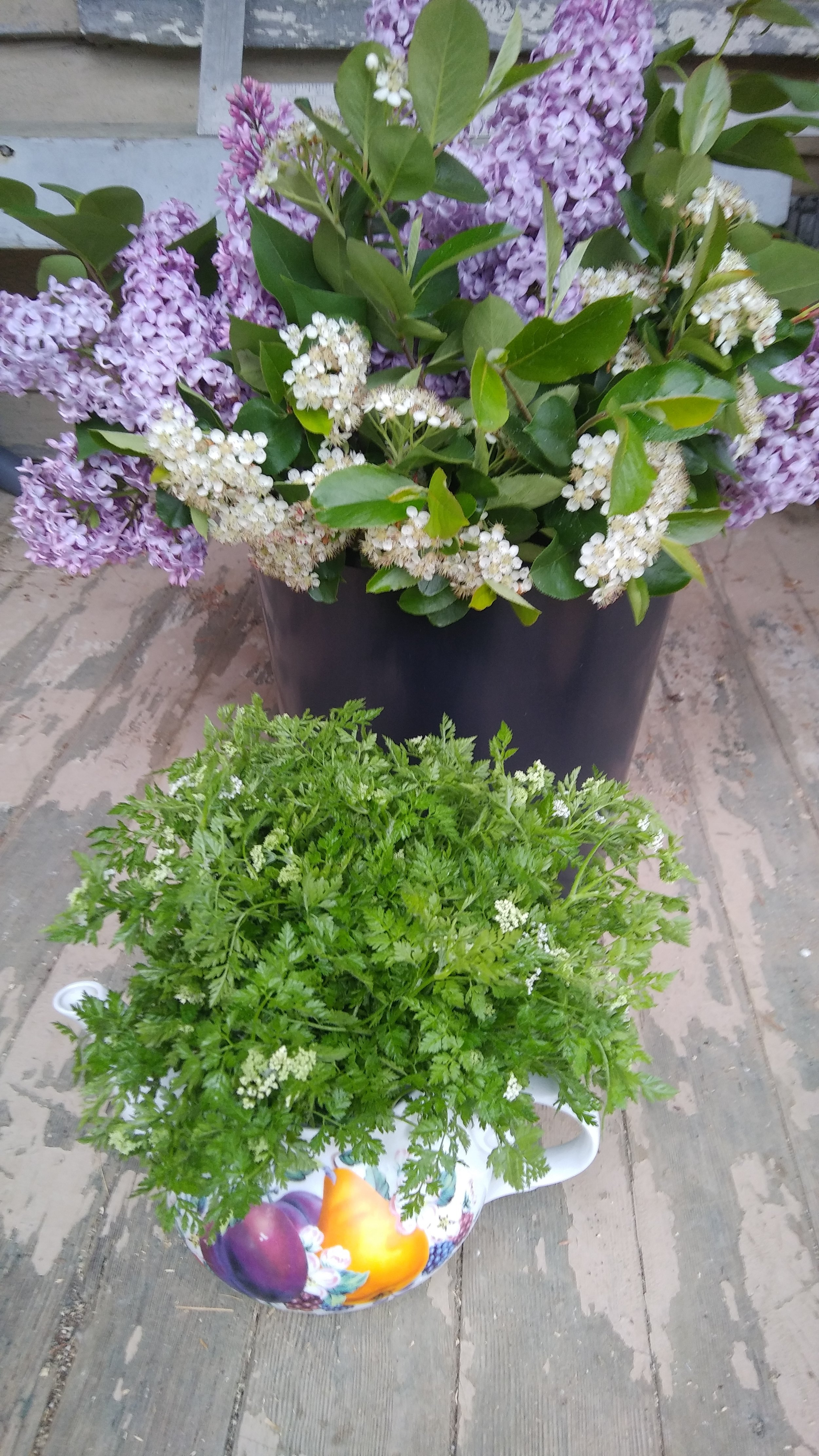 Lilac and chervil bouquets of spring mojo. Photo by Erin Schneider
