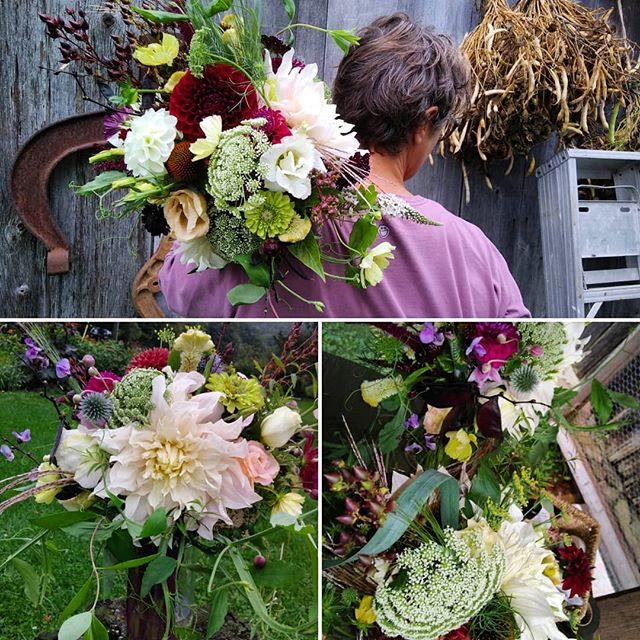 heavy lifting dahlia season  but oh so luxurious when propped up by 23 other species of flower friends for this fridays wedding flower feasts. grateful that the heavy rains stayed at bay and color to lift the perpetual mists.  #weddingflowers, #organicdahlias, #localflowerfarm, #dinnerplatedahlia, #farmerflorist