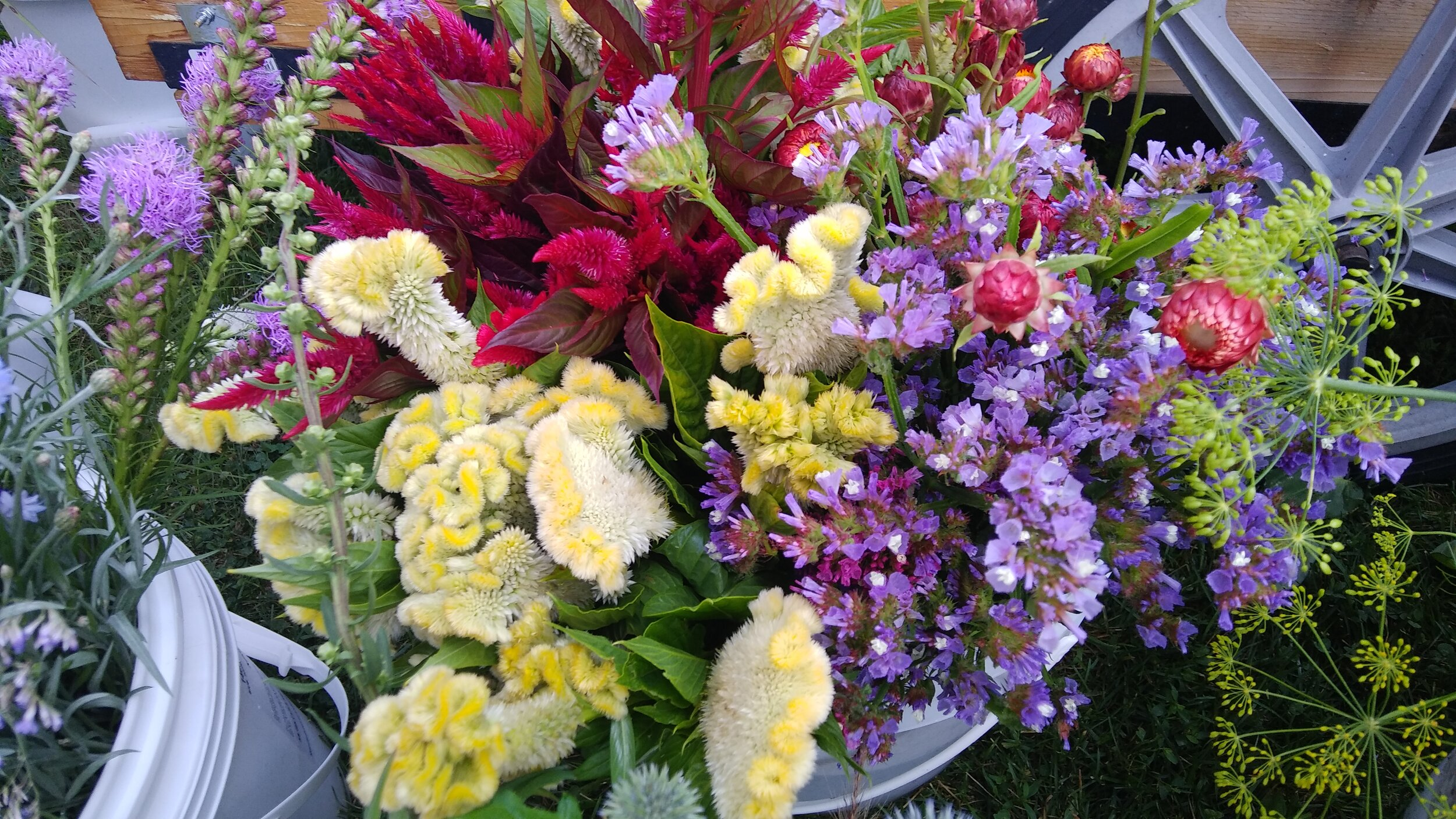 celosia stattice bucket of blooms.jpg