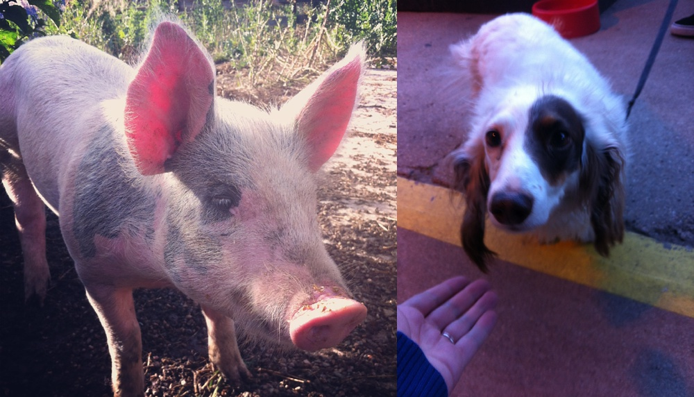 We loved her so much we even took photos of other animals who REMINDED us of her.