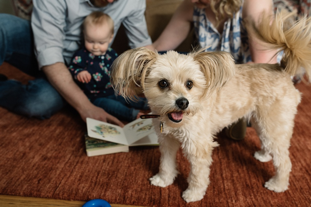 A happy family with their dog at a family portrait session in Fort Collins, Colorado. Family portrait photography by Sonja Salzburg of Sonja K Photography.