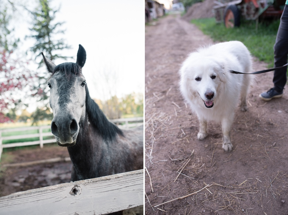 A horse and a dog at Poudre River Stable in Fort Collins, Colorado. Family portrait and pet photography by Sonja Salzburg of Sonja K Photography.