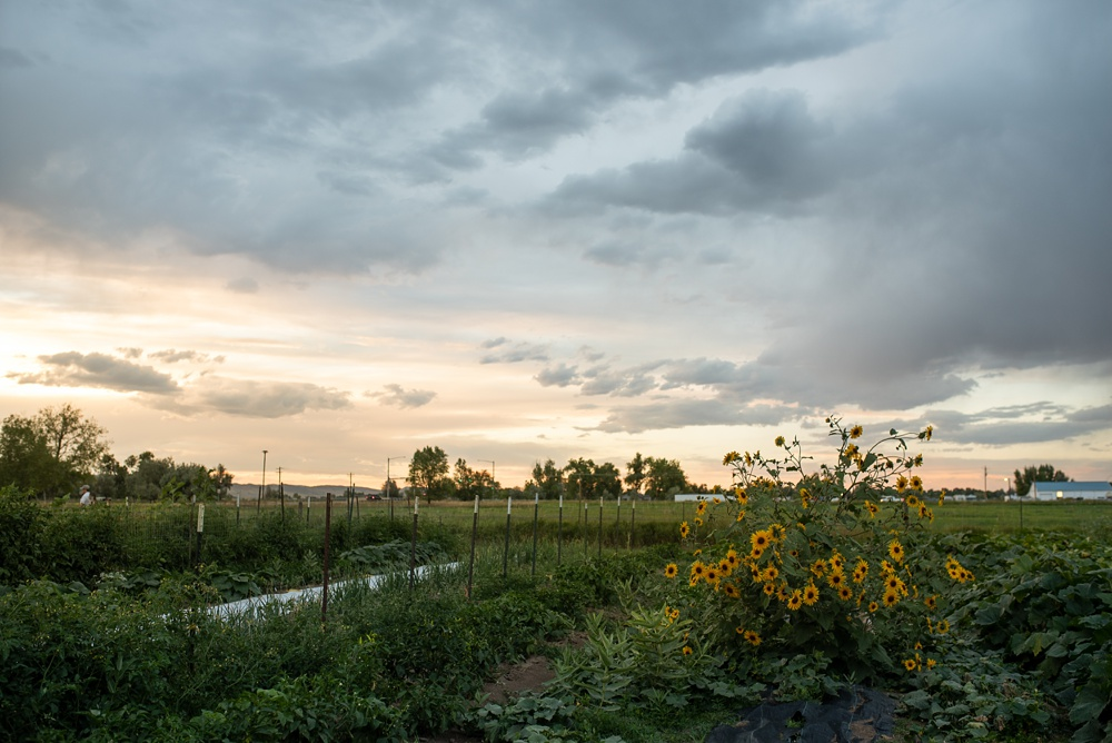 The sunset at The Growing Project at the Burrow at the Fortified Collaborations 3 Forks Progressive Farm Dinner in Fort Collins, Colorado. Event and food and beverage photography by Sonja Salzburg of Sonja K Photography.