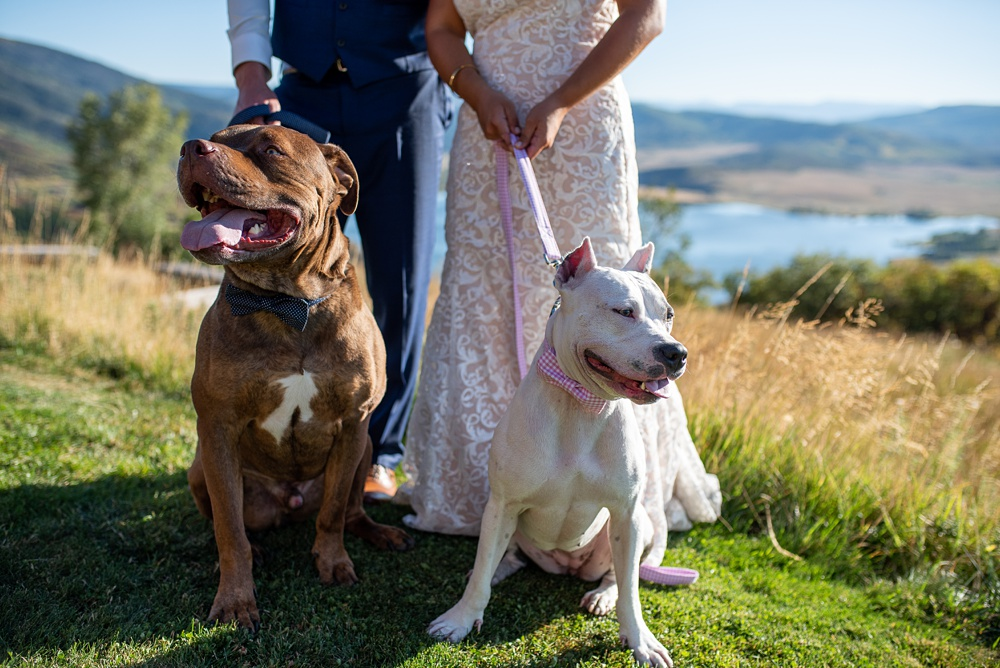 The cute dogs of the bride and groom's at their wedding at Bella Vista Estate in Steamboat Springs, Colorado. Photography by Sonja Salzburg with Sonja K Photography
