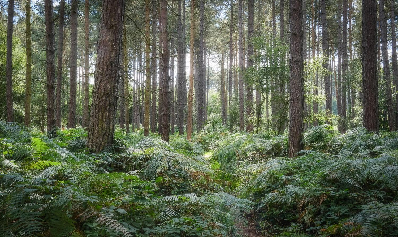 Sherwood_Pines.jpg