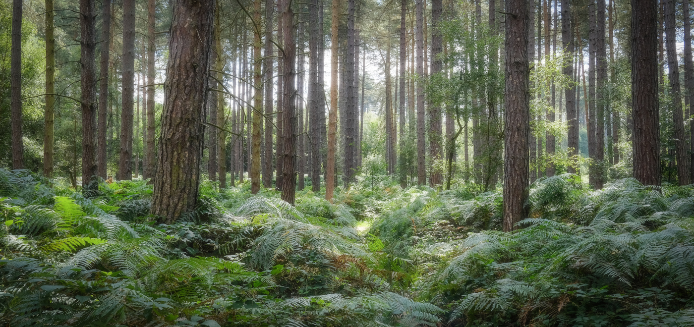 Sherwood Pines, Nottingham.