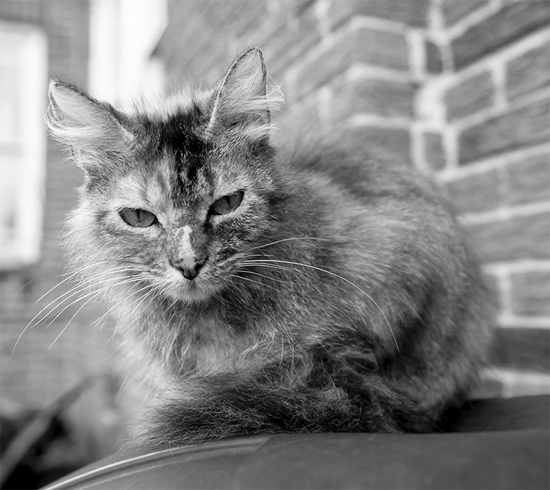 """""""Mister B was lost over 12 years ago, and she was our favorite pet. We miss her so much.""""  -Sadof and Superfly"""