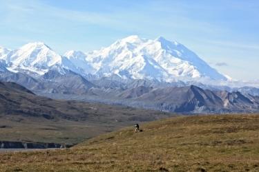Denali View.jpg