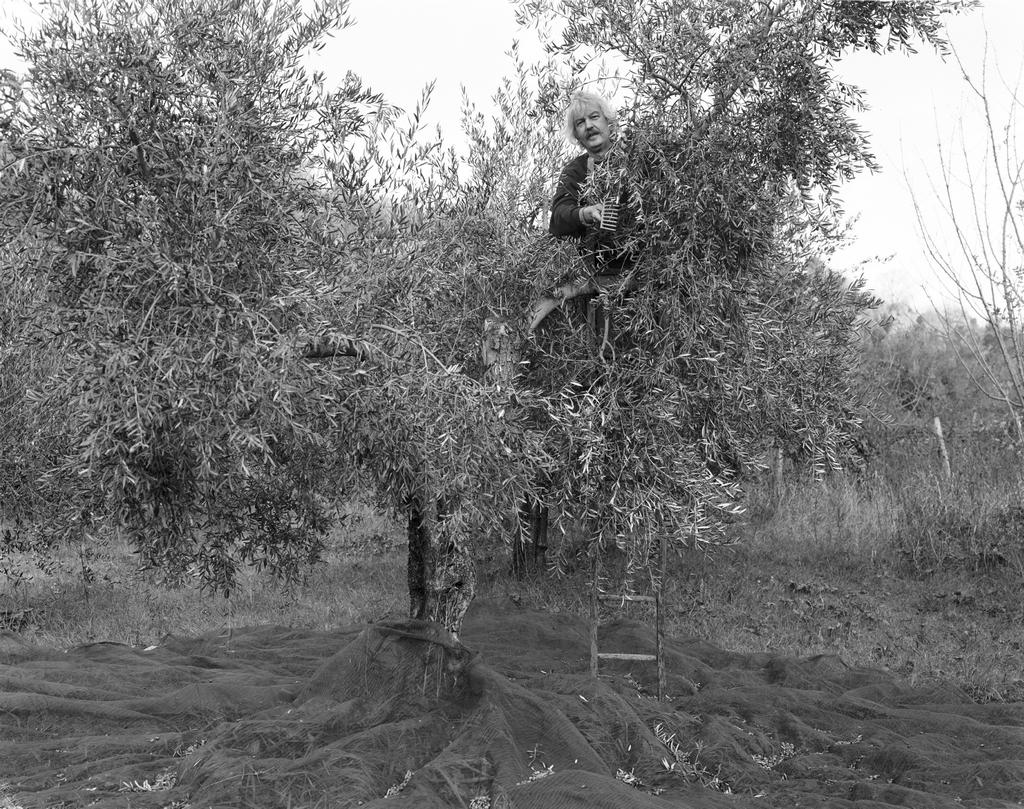 Dante in tree, 2004.jpg
