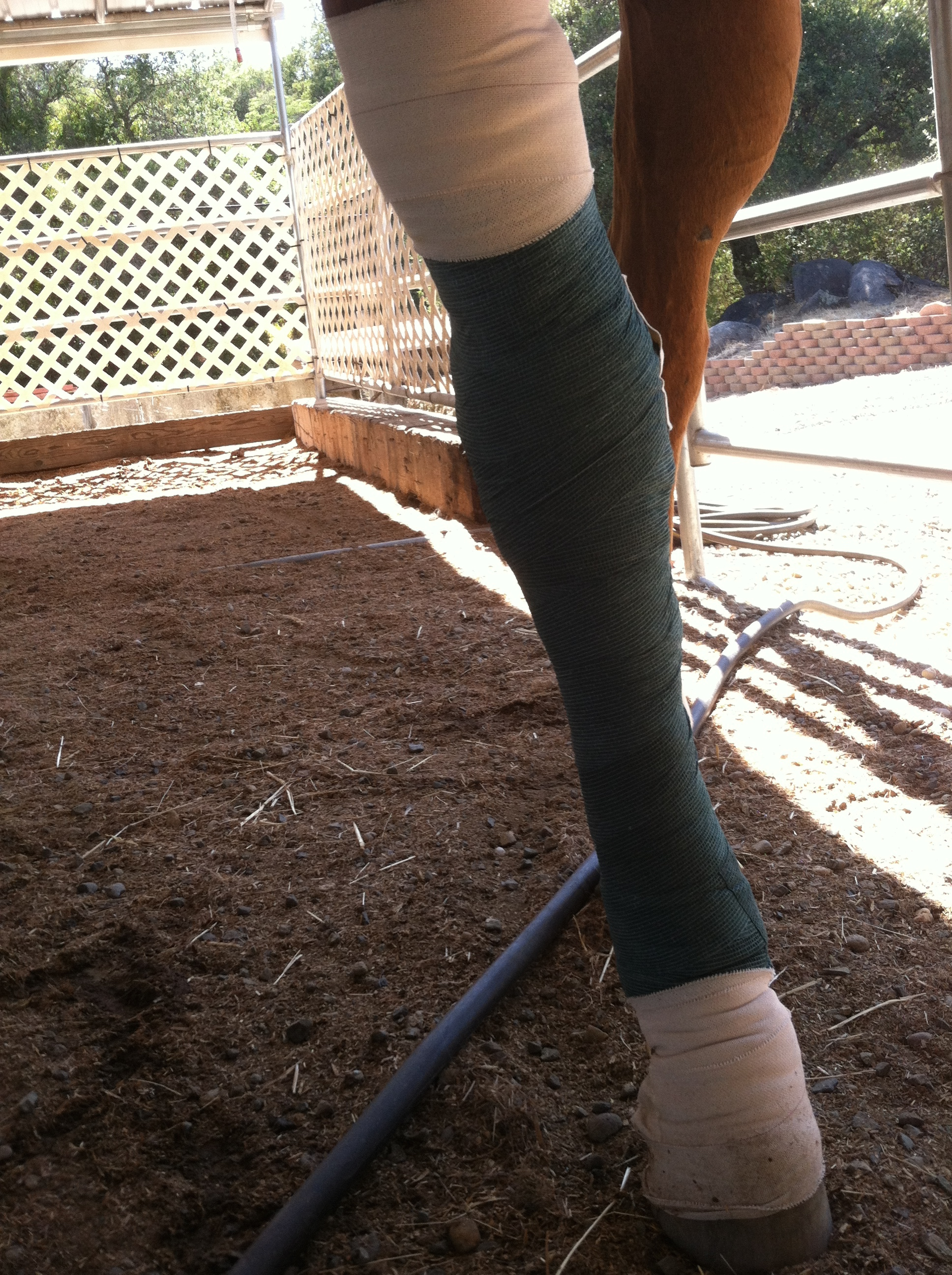 An unfortunate accident my senior mare had in the pasture that warranted an emergency vet call