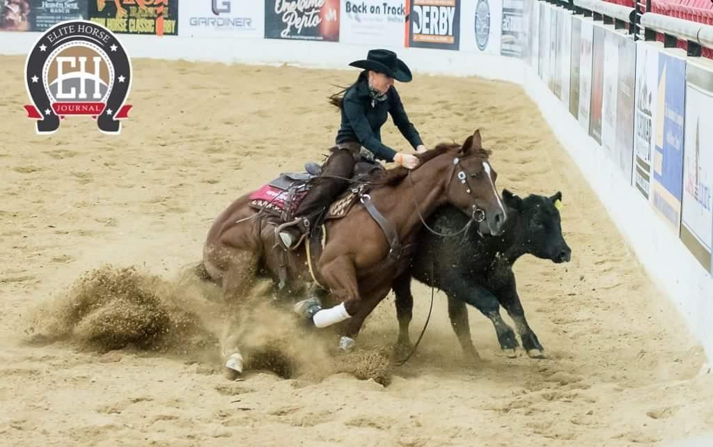 Photo Credit: Elite Horse Journal